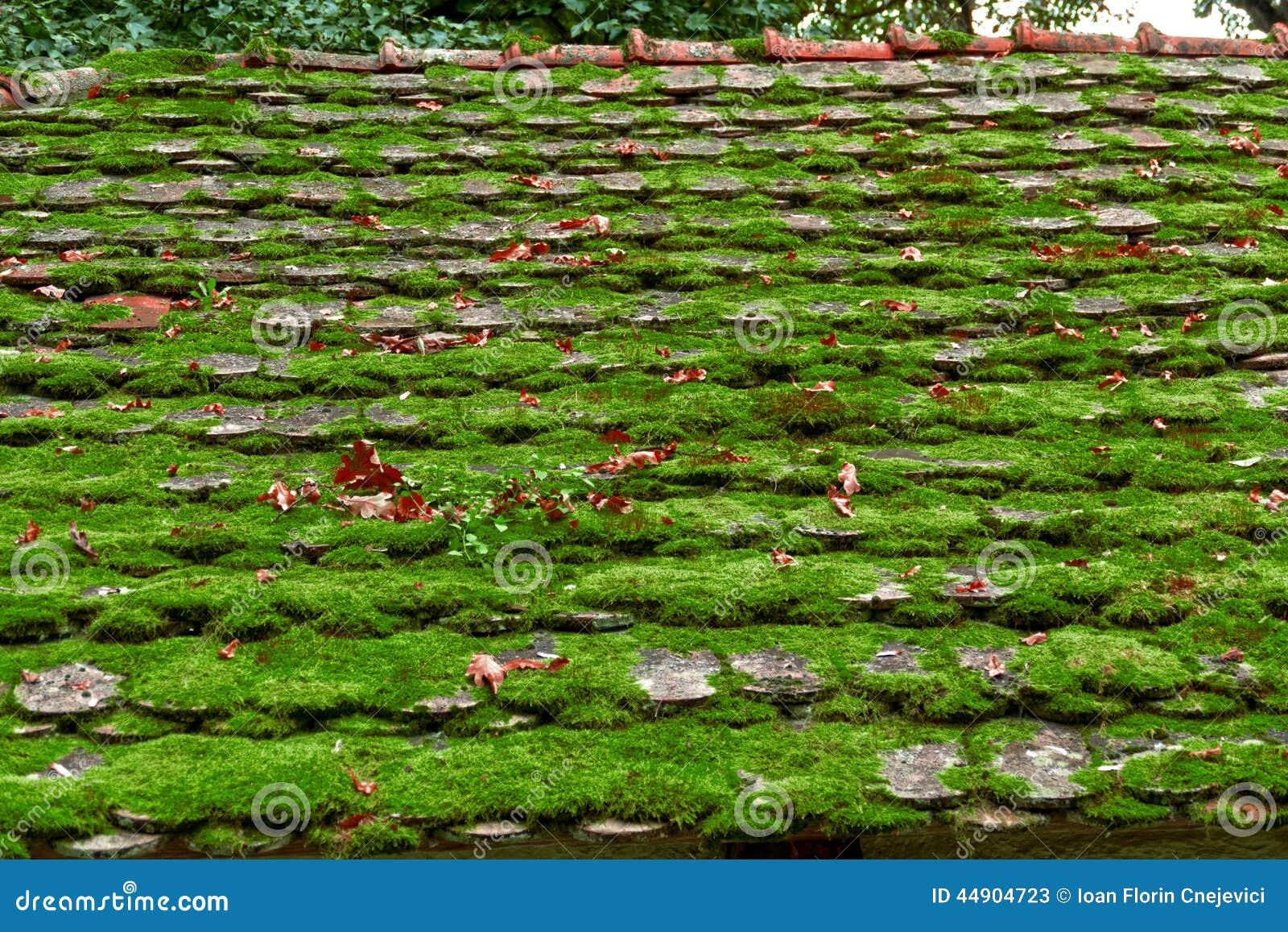 vieille ferme de toit couverte de la mousse verte image stock image du wooden herbe 44904723. Black Bedroom Furniture Sets. Home Design Ideas