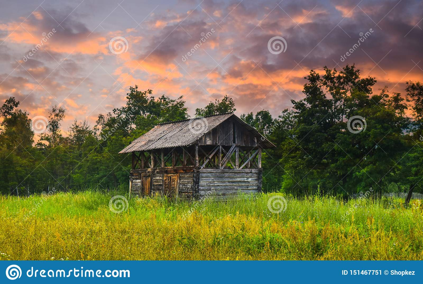 Vieille grange au bord de la forêt avec l herbe verte grande et les fleurs sauvages au coucher du soleil Photo courante dénommée