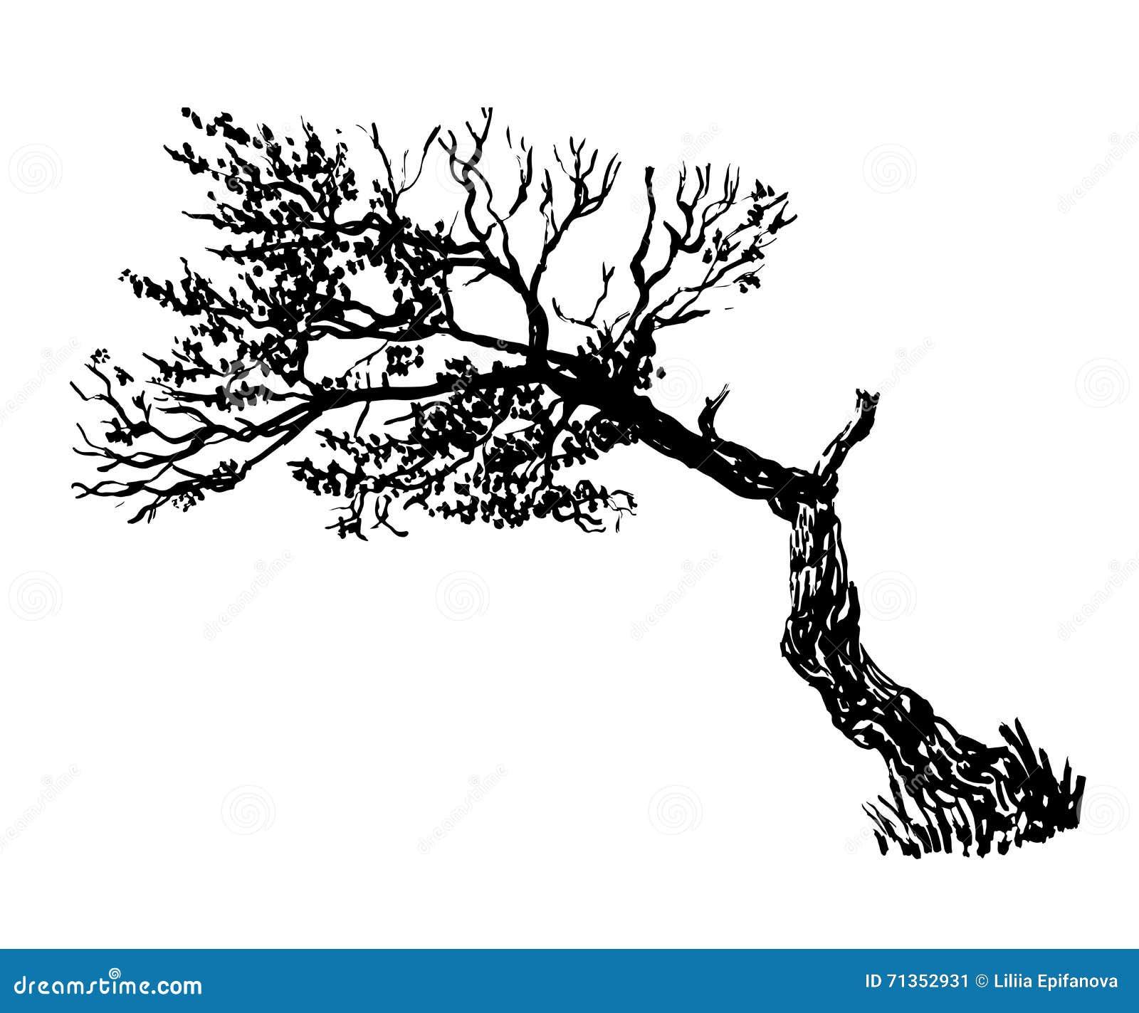 Vieille illustration de dessin d 39 arbre de feuillage - Dessins d arbre ...