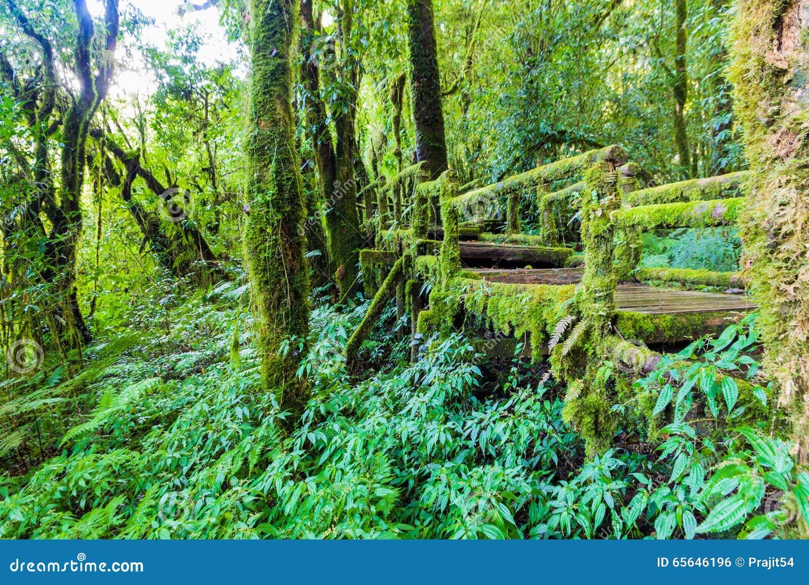 Vieille passerelle en bois de pied