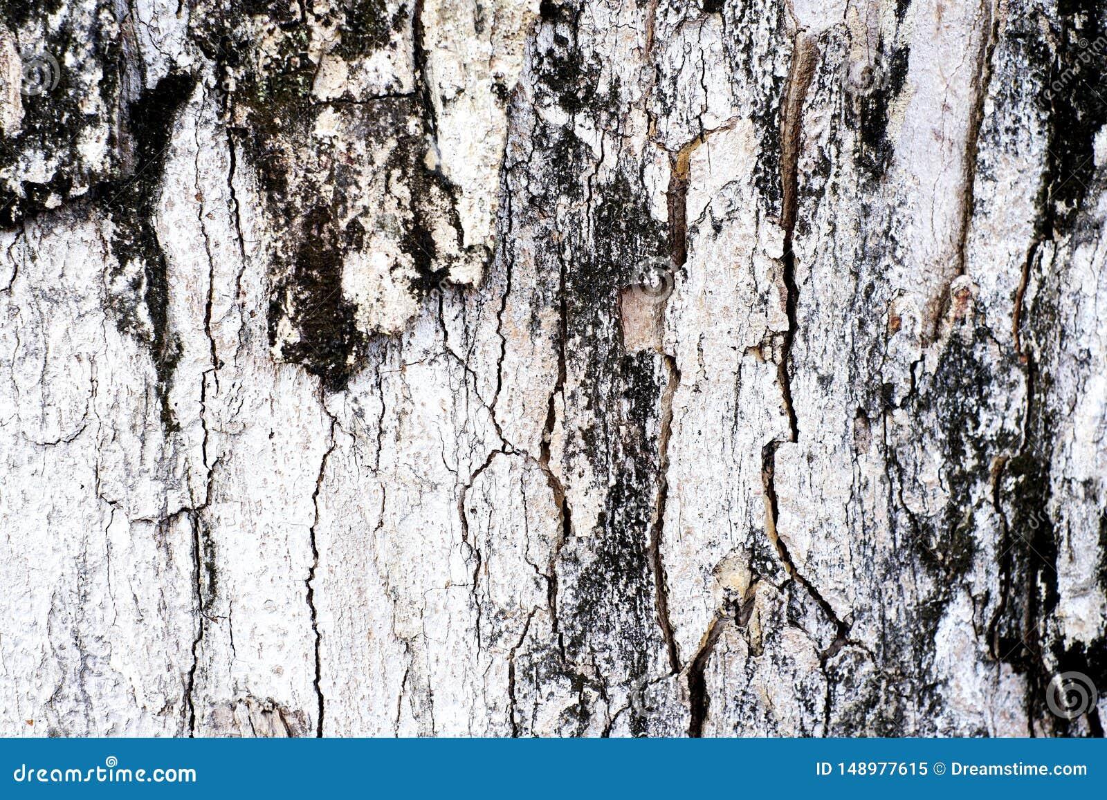 Vieille peau en bois dans brun de texture et noir blancs