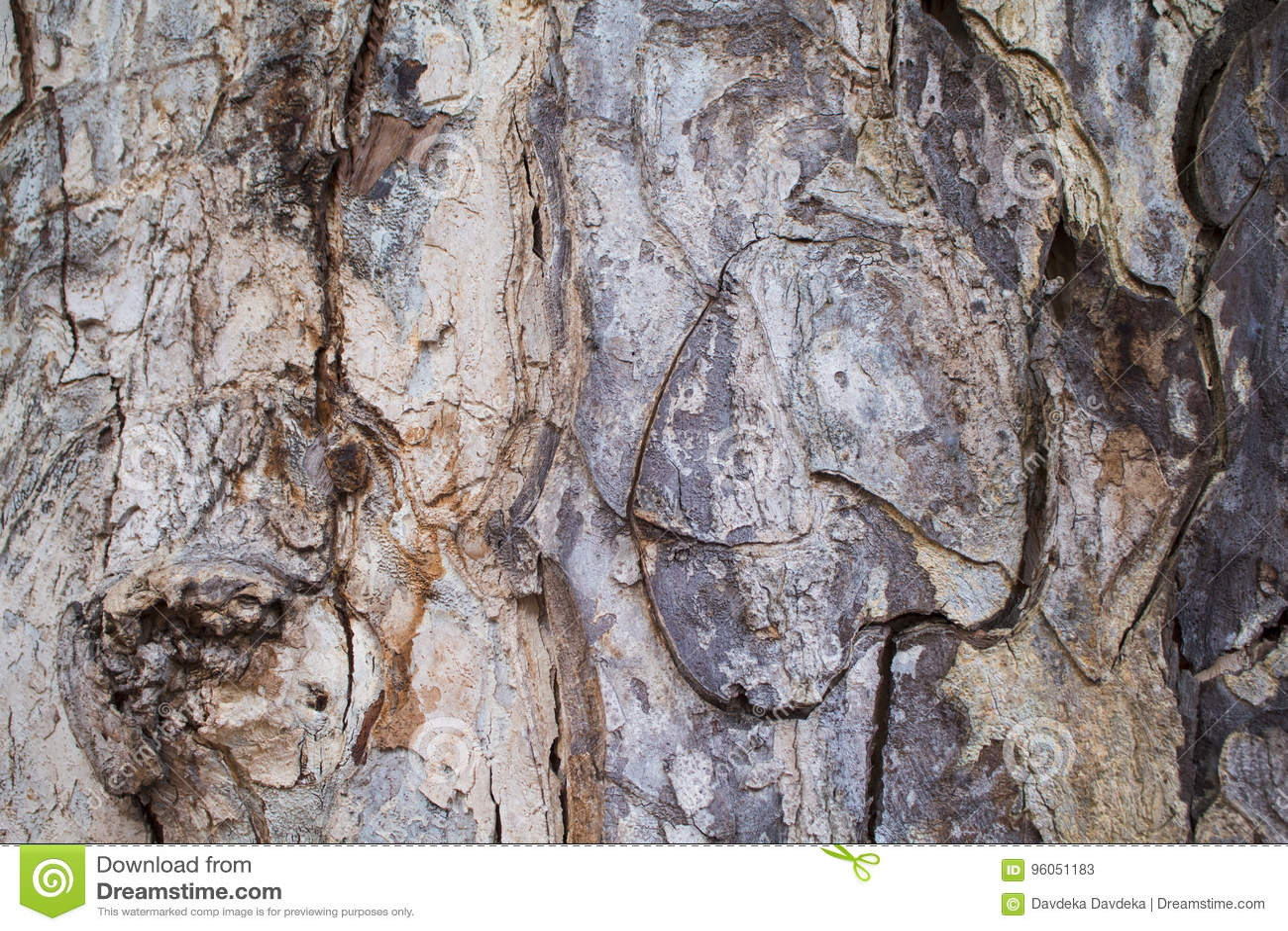 Vieille photo de texture de plan rapproché d écorce de chêne Plan rapproché rustique de tronc d arbre