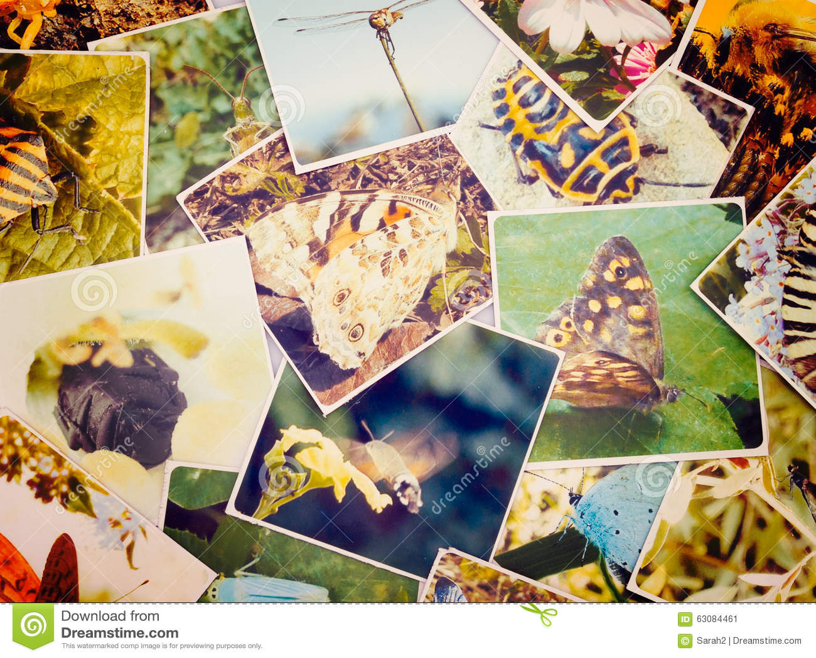 Download Vieilles Photos De Photographie De Nature Et De Macro Image stock - Image du collage, photos: 63084461