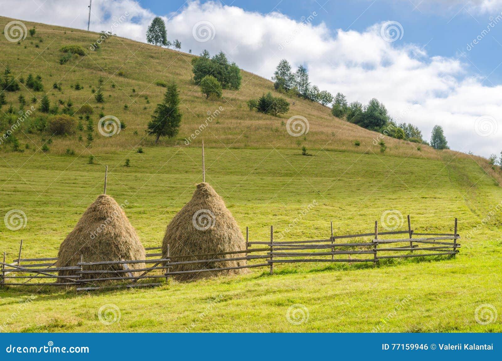 Vieilles piles traditionnelles de foin, scène rurale typique en montagnes carpathiennes Horizontal ukrainien
