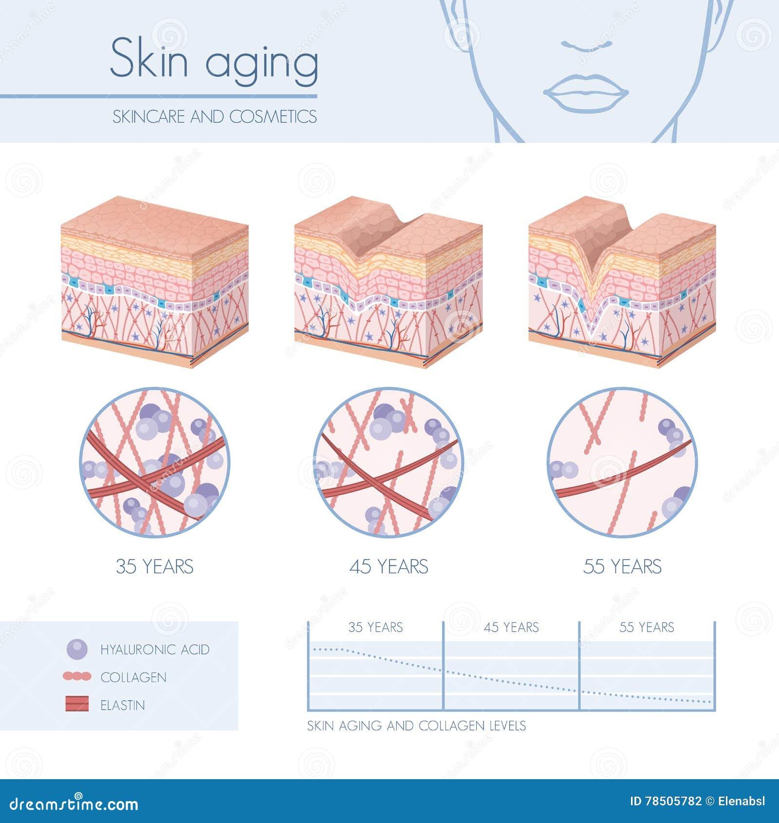 Vieillissement de peau