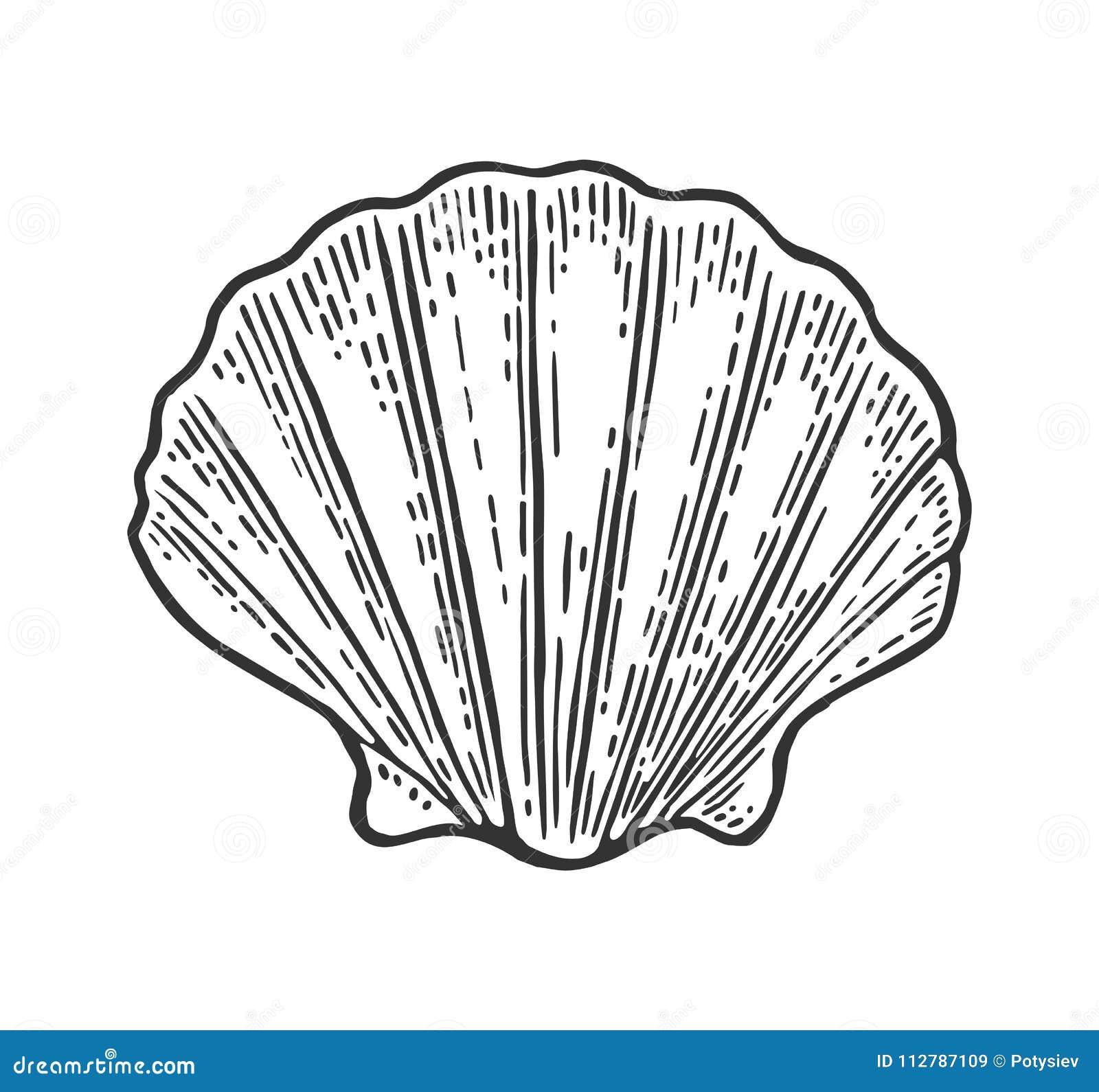 Vieira do shell do mar Ilustração do vintage da gravura da cor Isolado no fundo branco