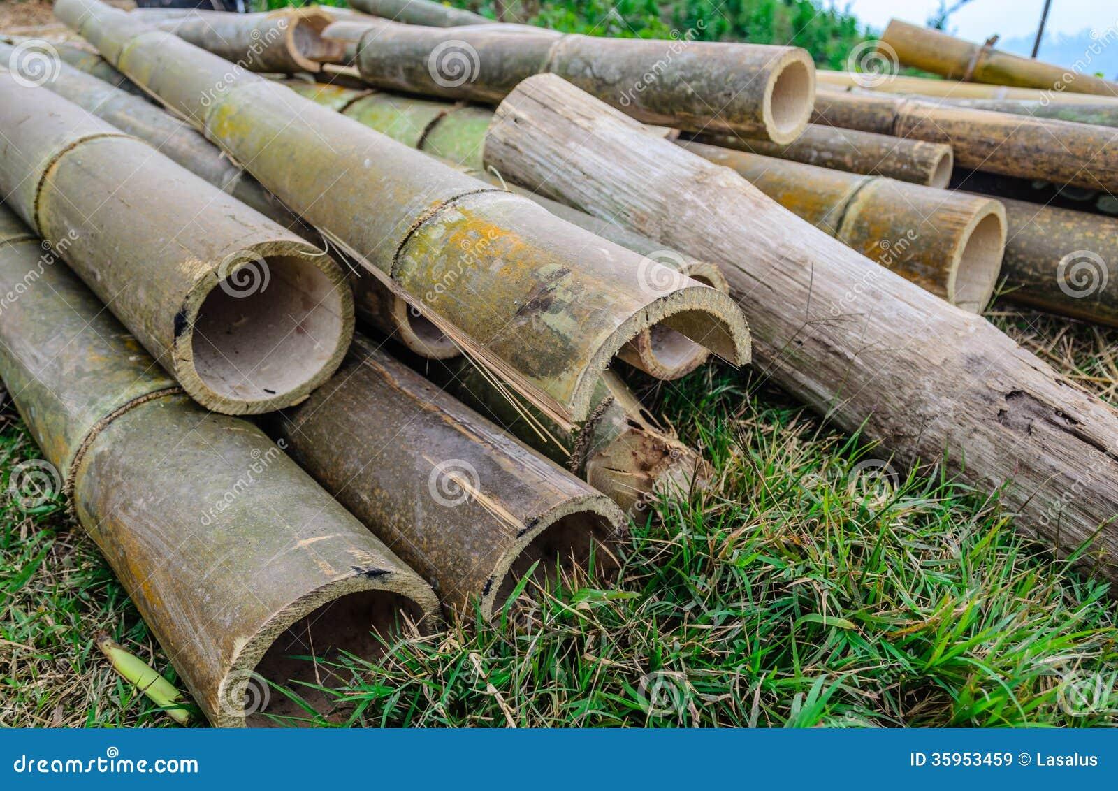 Vieja rebanada de bambú, Tailandia