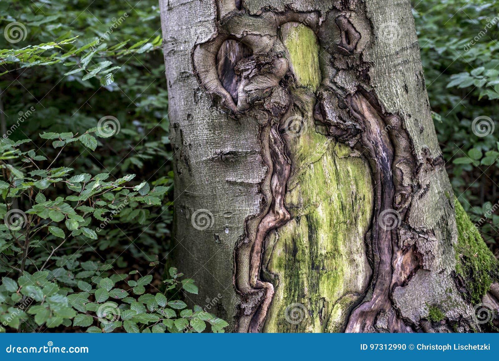 Vieja textura cubierta de musgo espeluznante agrietada de la corteza de la corteza de árbol con el bosque de la planta verde