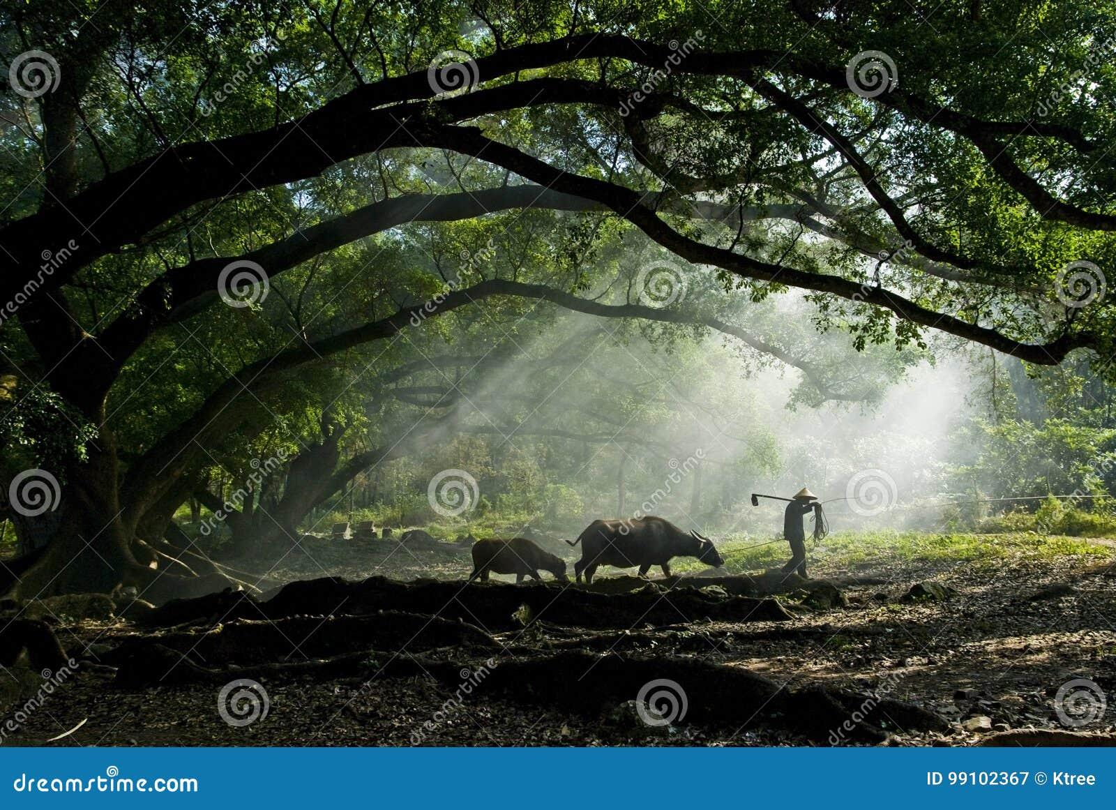 Viejo granjero debajo del baniano antiguo