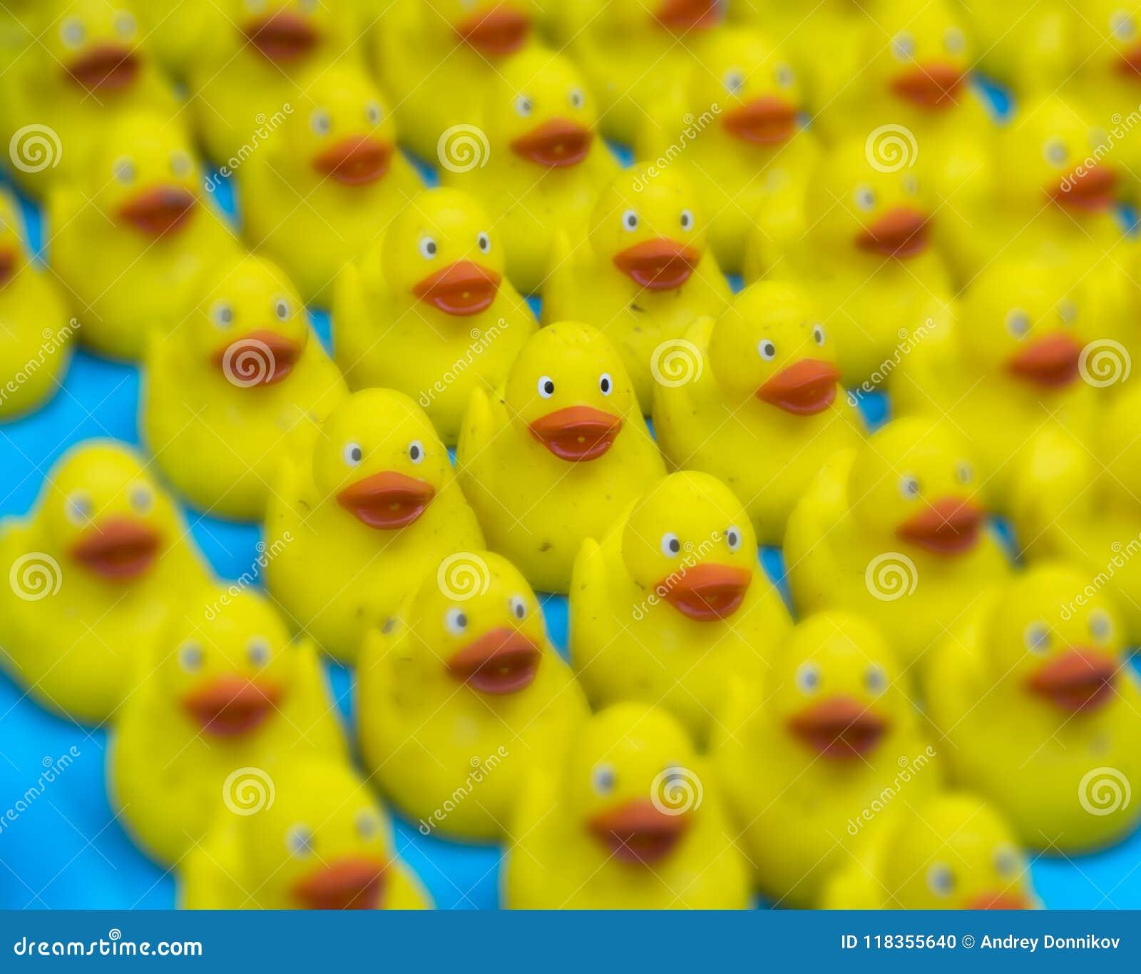 Viel Ducky Toy Little Yellow Rubber Duck-Bad-Spielzeug Selektiver Fokus