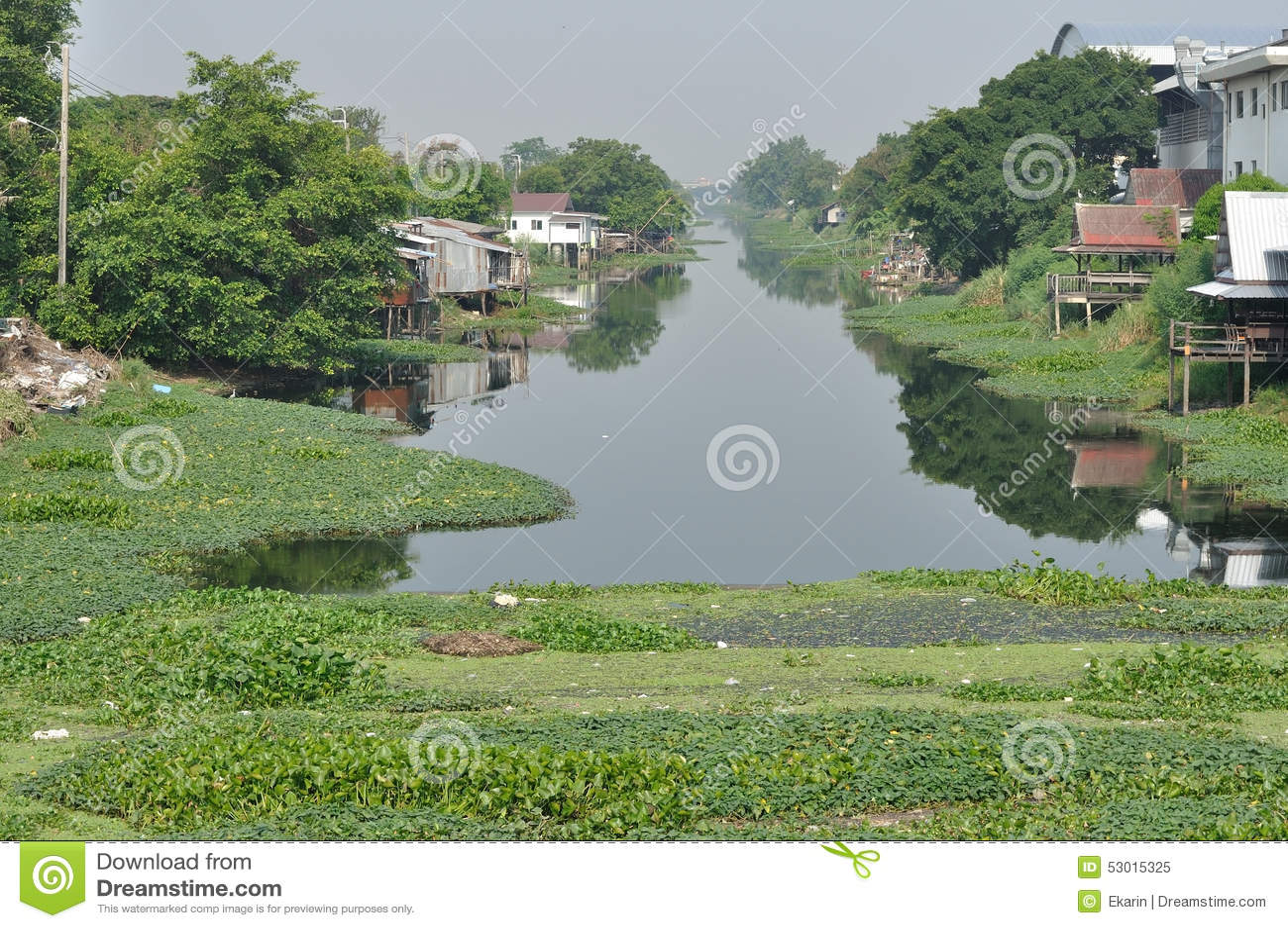 Viel machte Wasserhyazinthe im Kanal Wasserverschmutzung