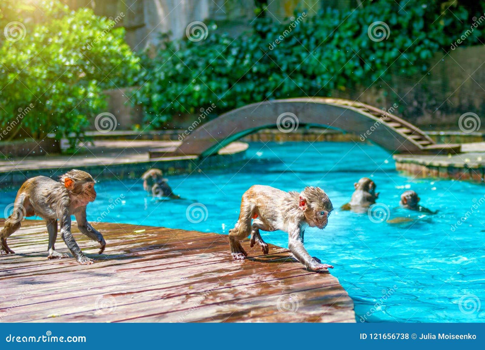 Spiel Schwimmen Kostenlos