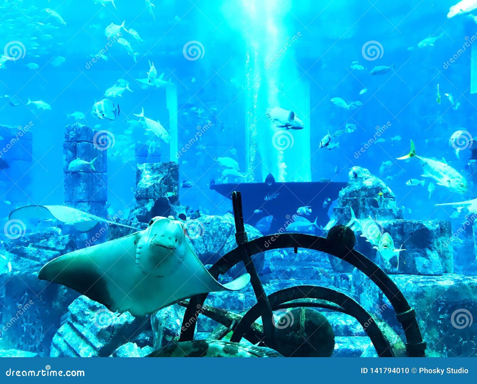 Viele Fische fingen unter Wasser