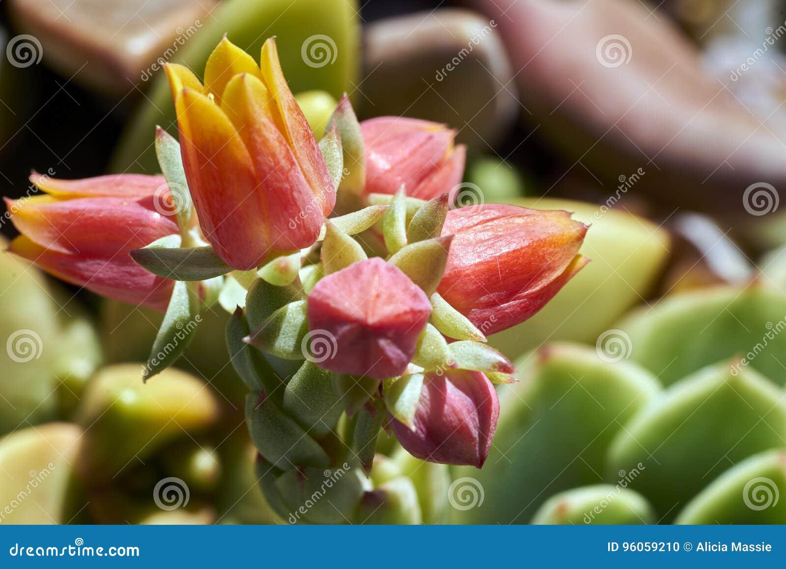 Vielzahl von Succulents in einer Dürre-toleranten Umwelt