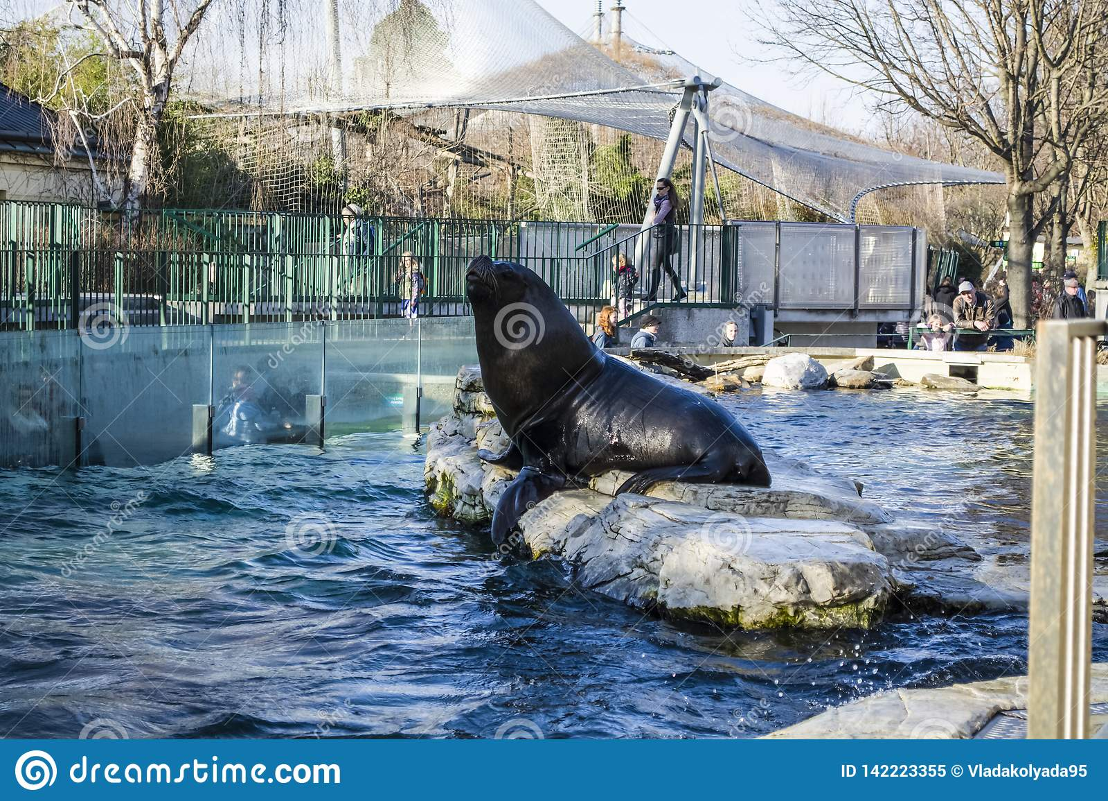 Vienna, Austria, 28 02 2019 Alimentazione delle guarnizioni nere nello stagno di uno zoo Intorno a molta gente stavano andando es