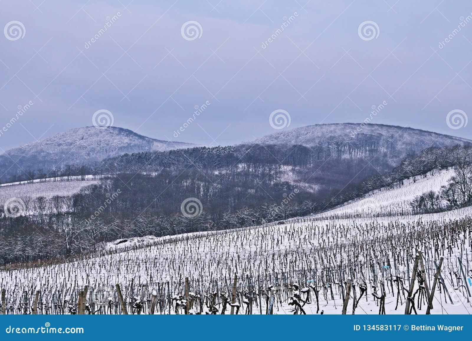 Vienna Vineyards In Winter Stock Image Image Of Romantic 134583117