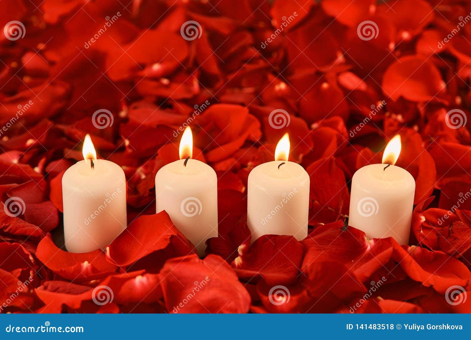 Vier brandende kaarsentribune in rode roze bloemblaadjes
