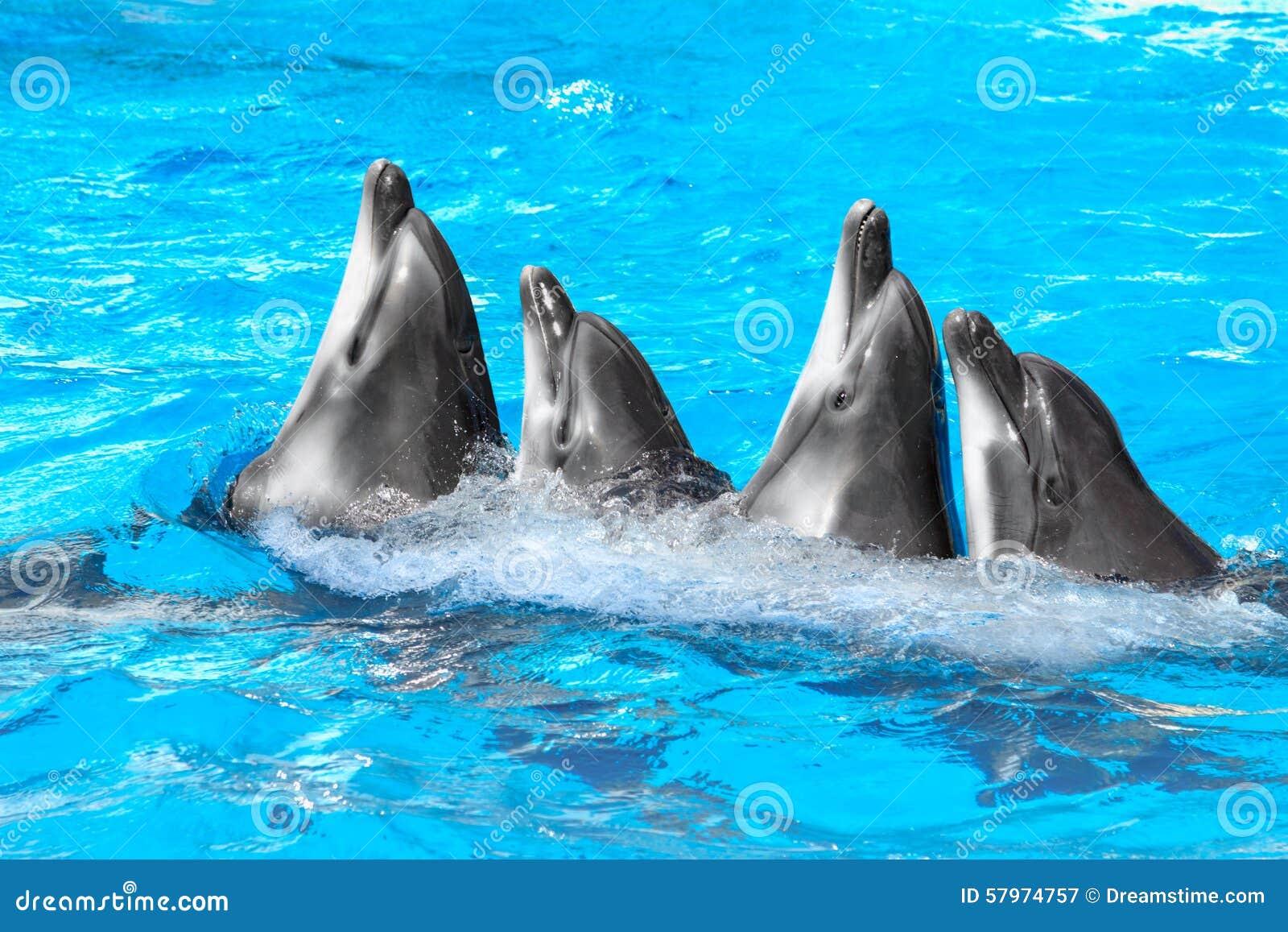 Vier dolfijnen en Beloega het dansen Lambada