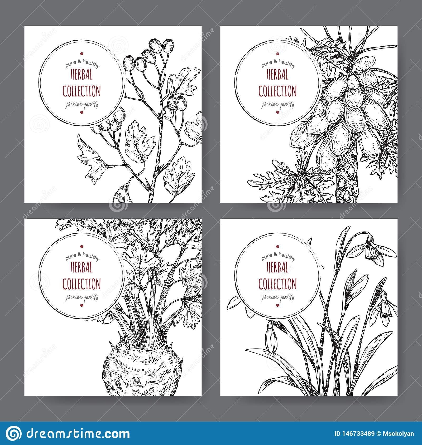 Vier etiketten met gemeenschappelijke haagdoorn, selderie, papajaboom en sneeuwklokjeschets
