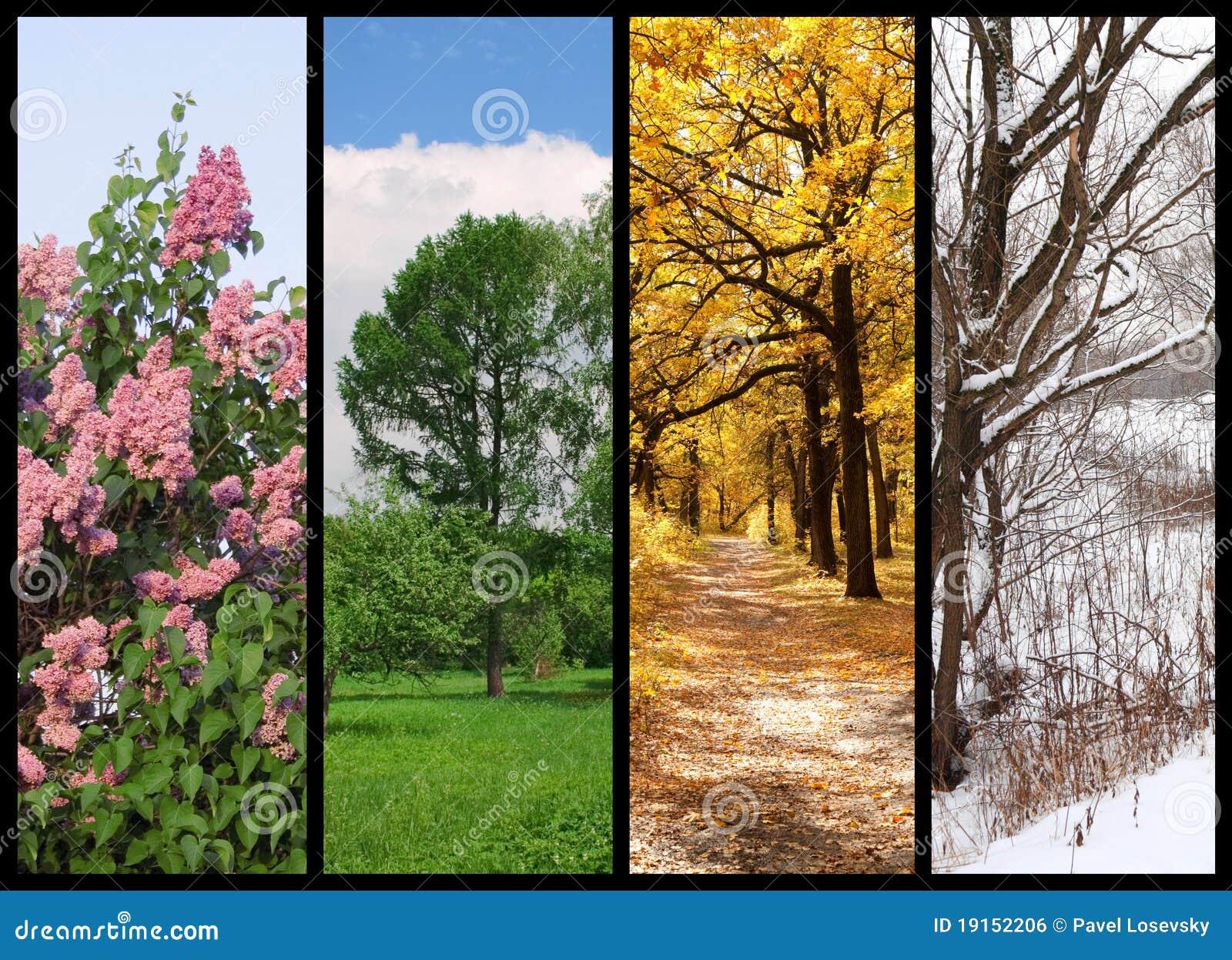 Vier Jahreszeiten Entspringen Sommer Herbst Winter