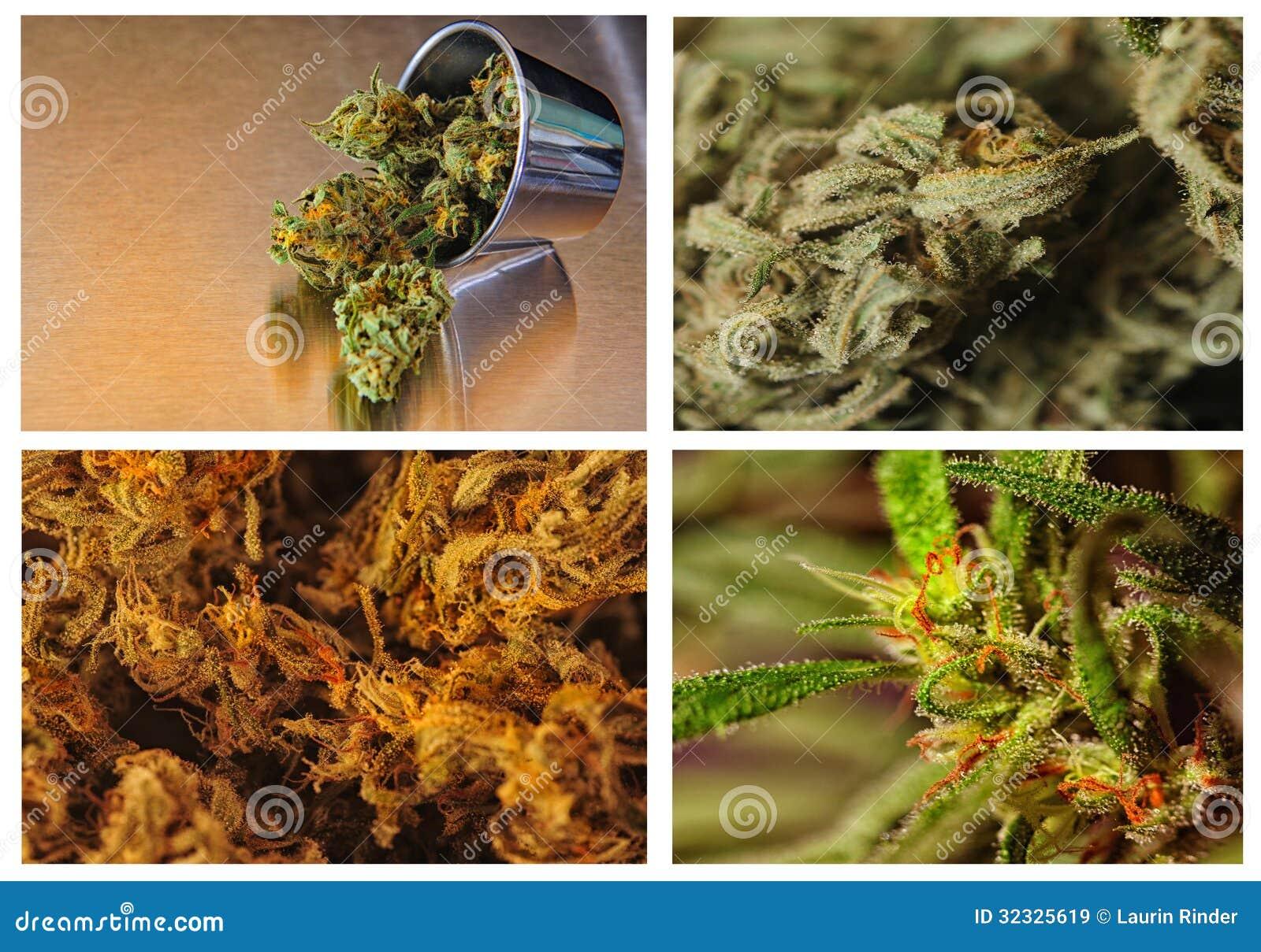 Vier rangen van marijuania