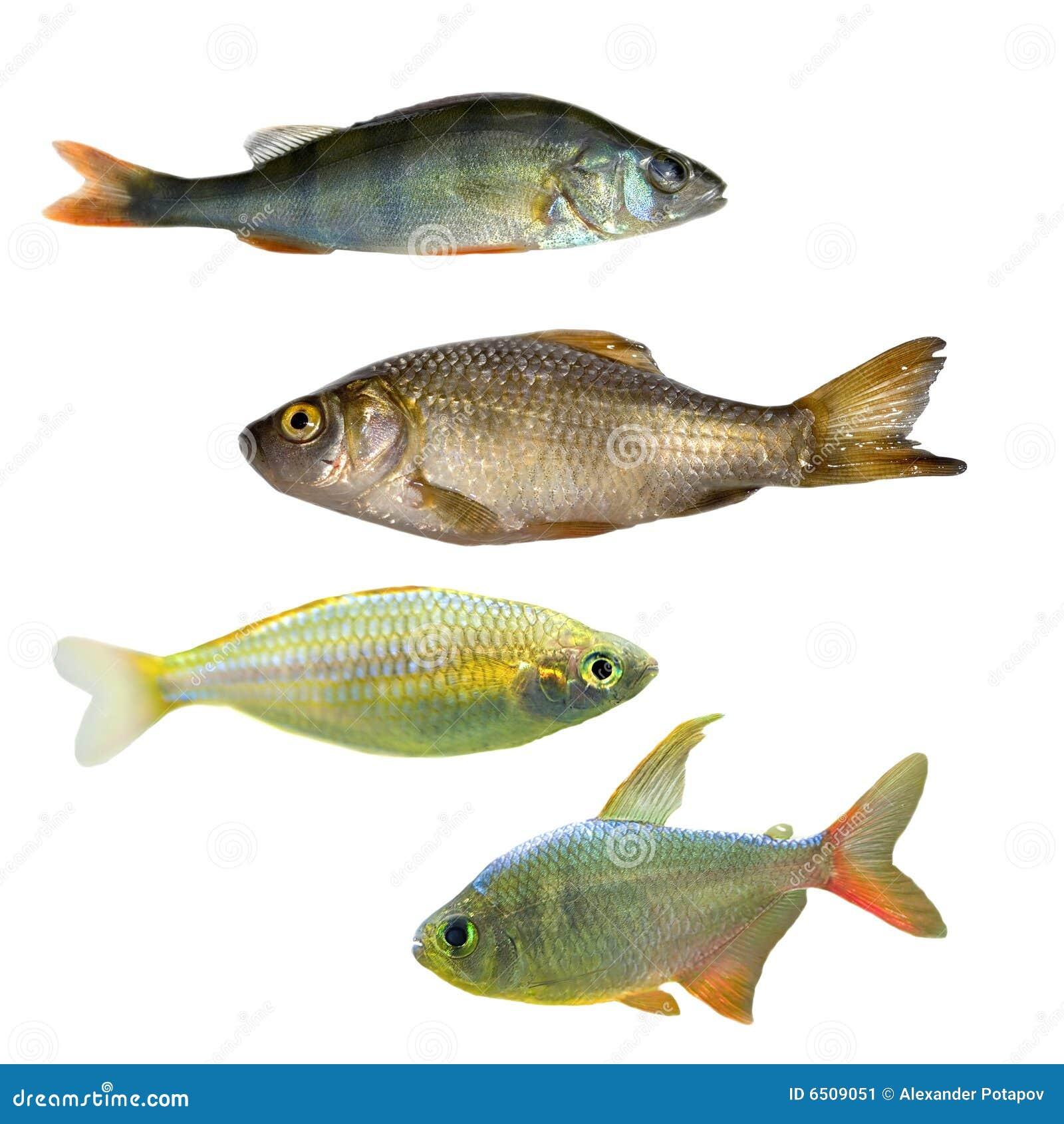 Vier verschiedene Fische