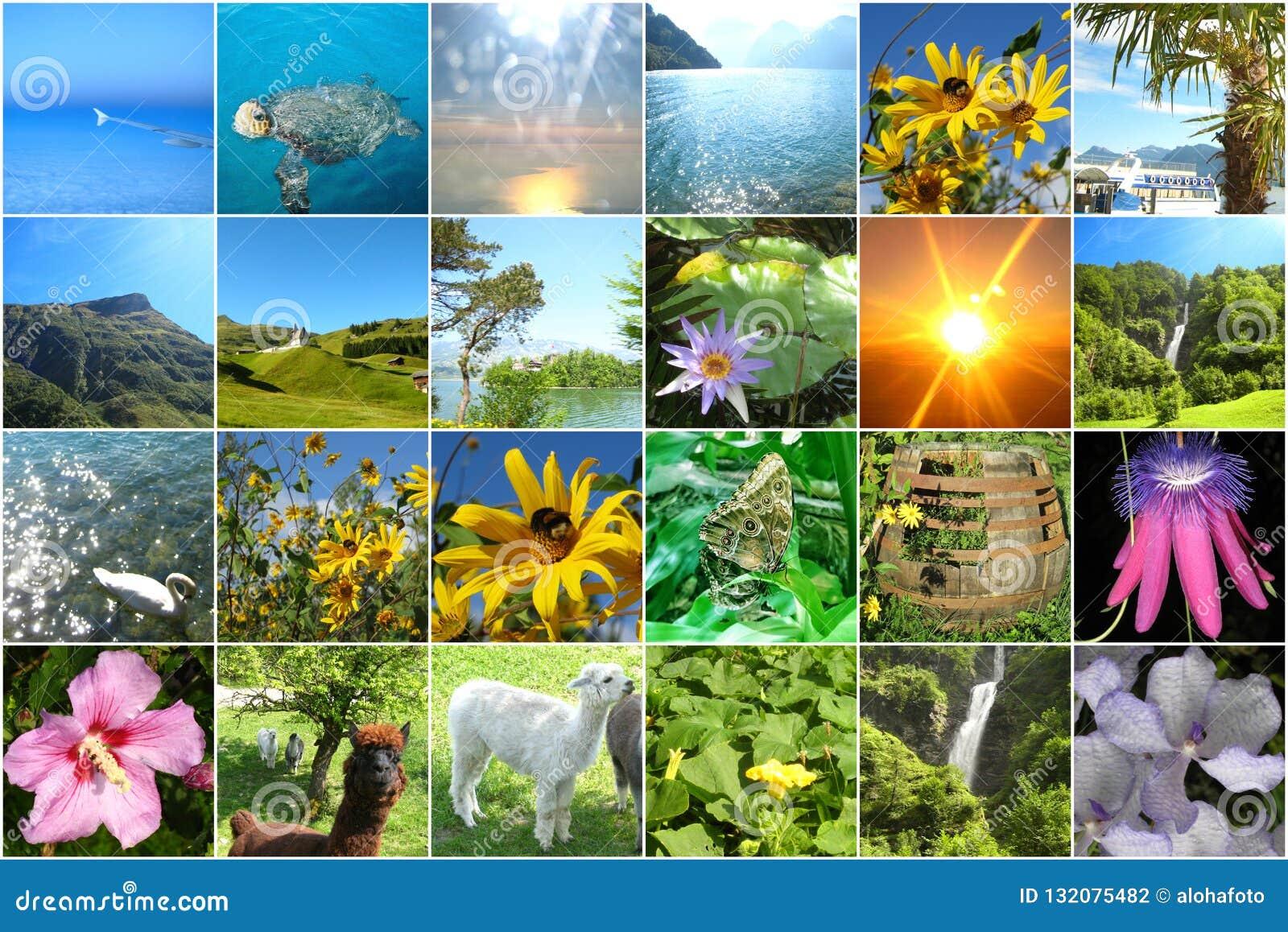 Vierentwintig vrolijke kleurrijke beelden voor wat betreft reis voor een komstkalender of een geheugenspel of voor het ontwerpen