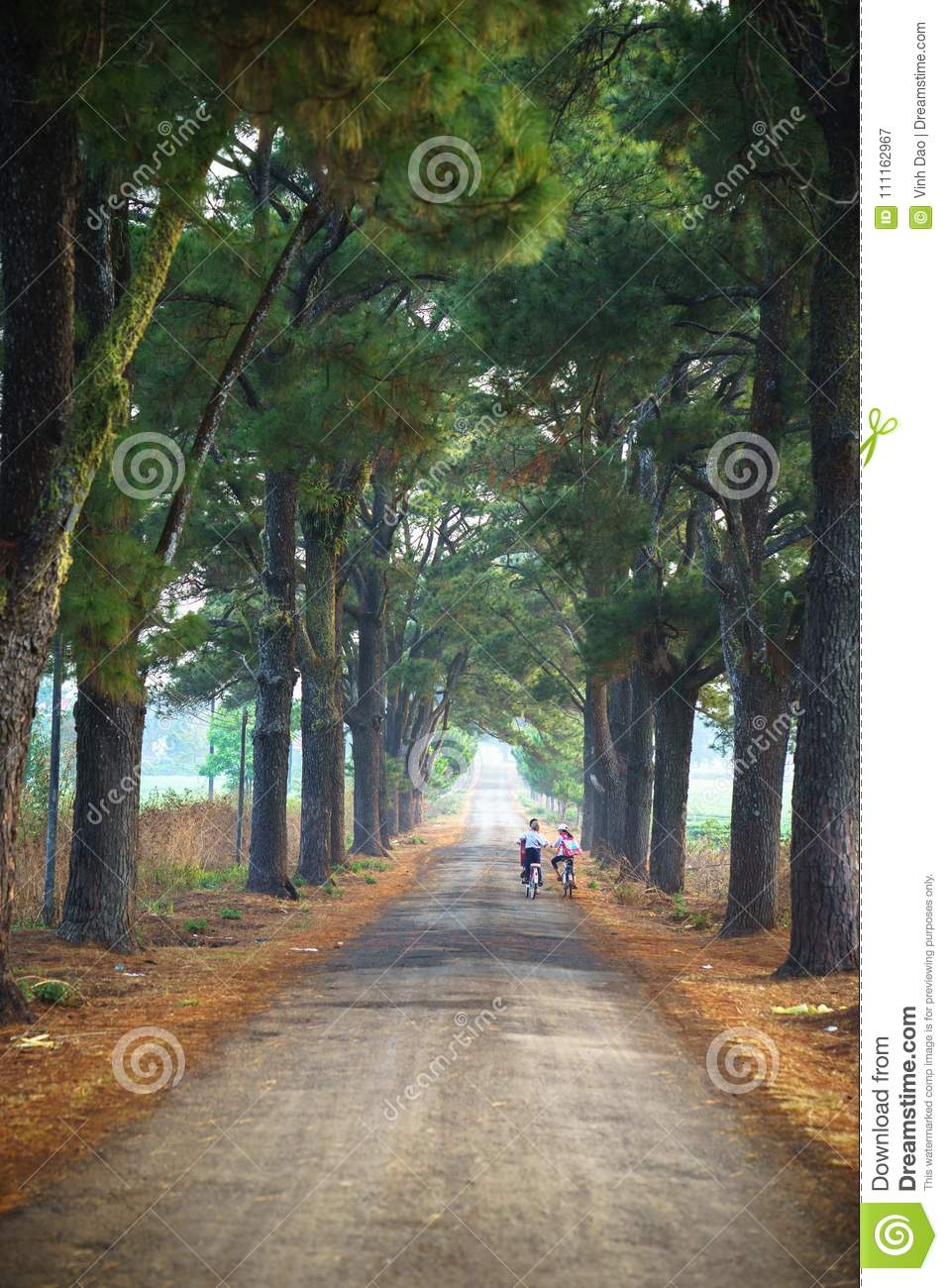 Vietnam countryside landscape with children cycling to school on soild road along lines of tree.
