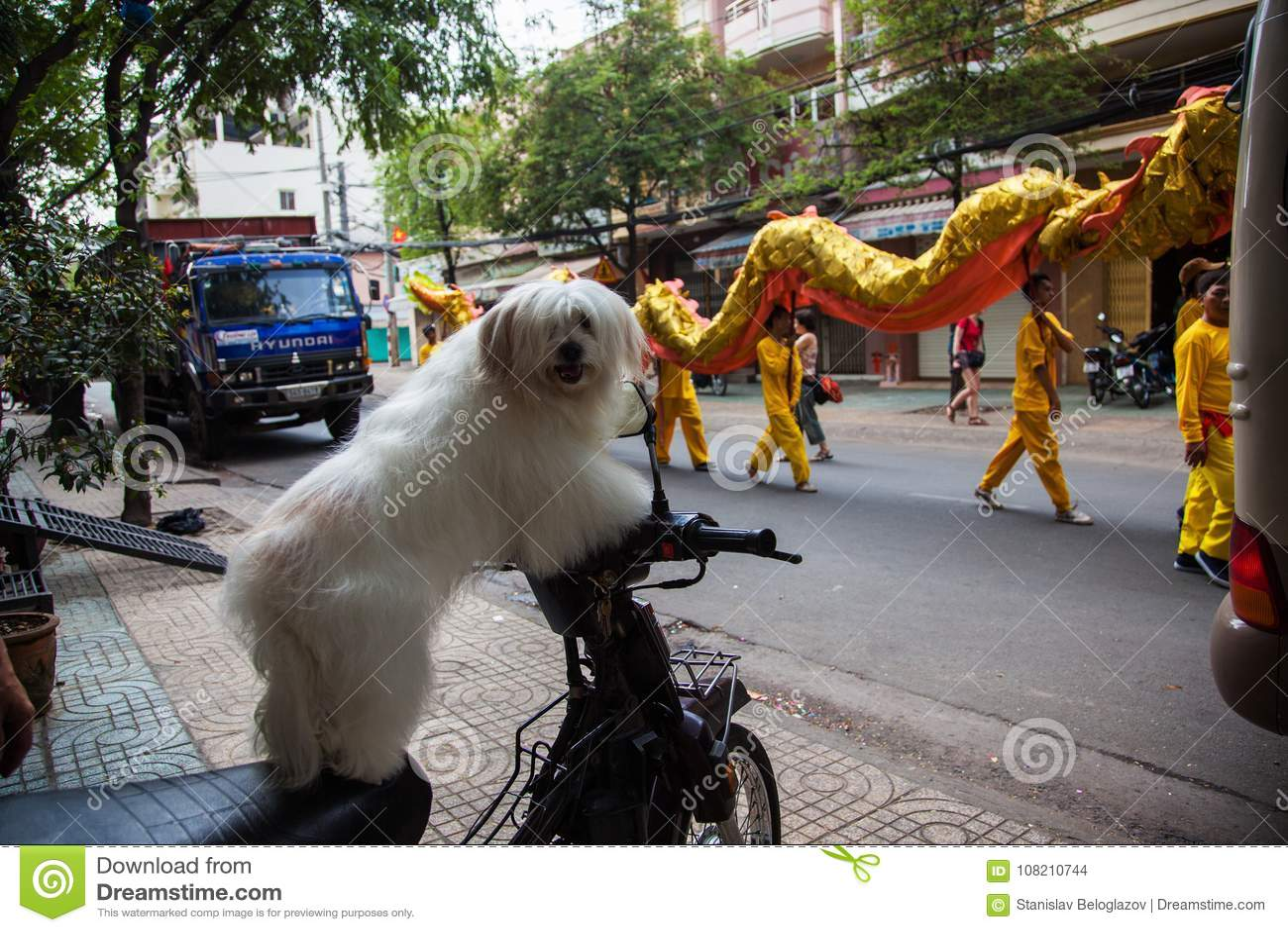 Vietnam - 22. Januar 2012: Die Hundeblicke auf den Drachetanz Vietnamesisches neues Jahr