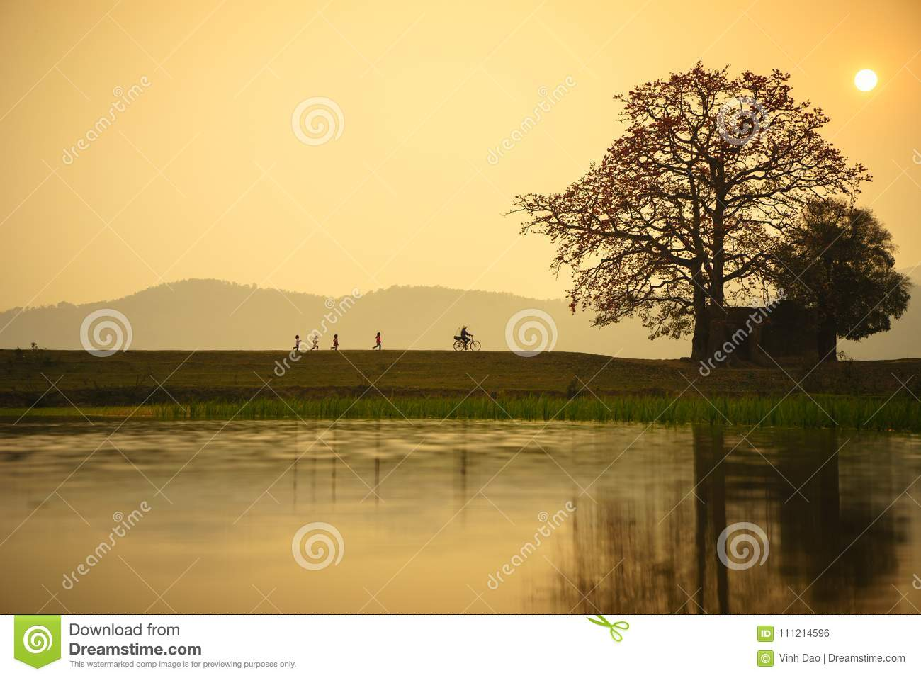 Vietnam landscape at sunset. Blossoming Bombax ceiba tree or Red Silk Cotton Flower with a woman cycling on countryside dyle
