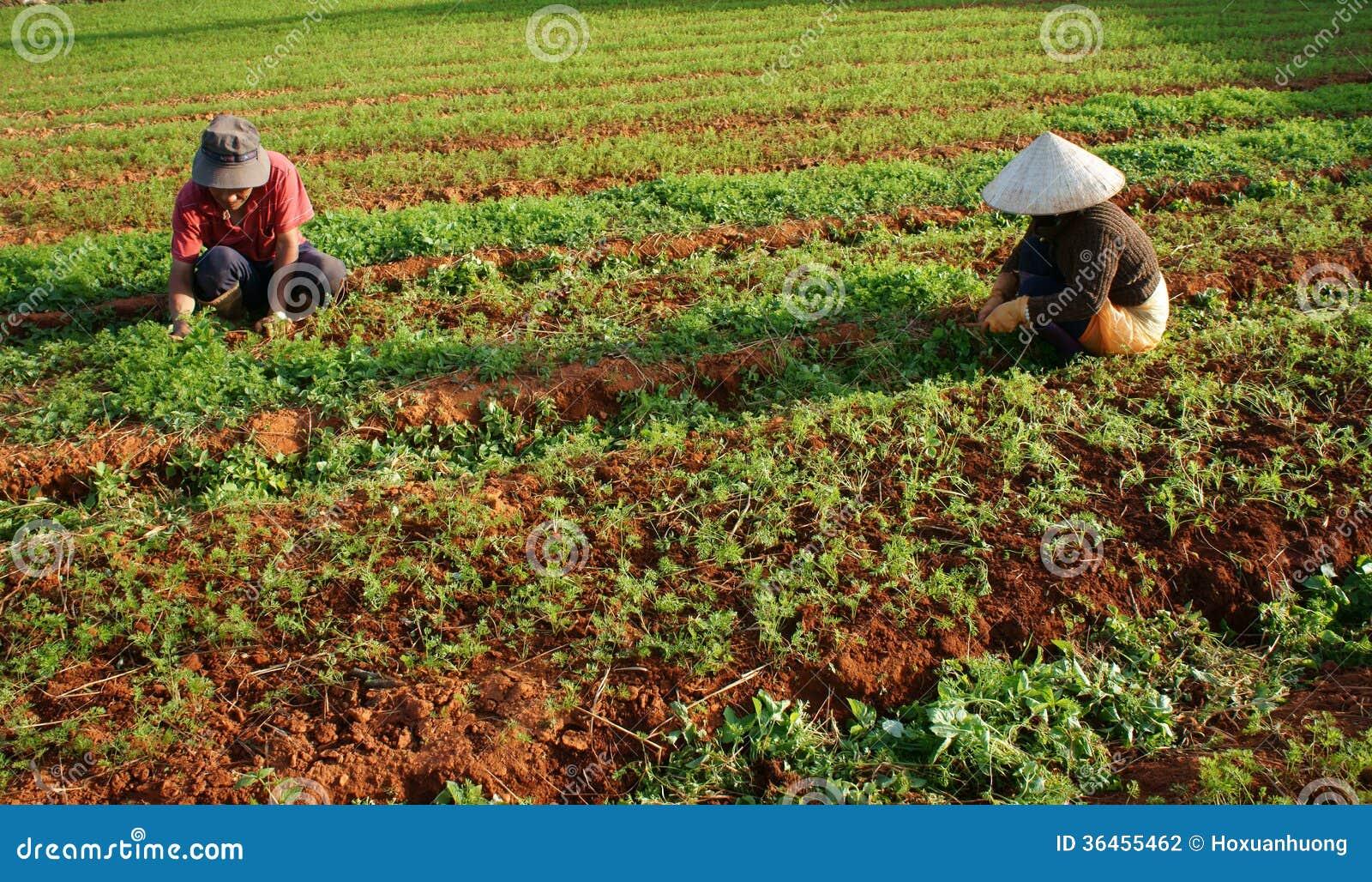 Seasonal Farm Work