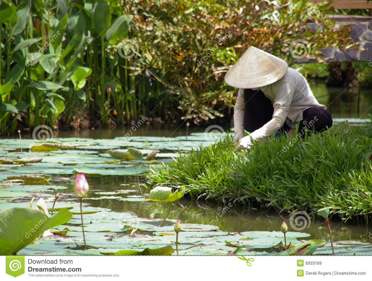 a woman tending a classic vietnamese garden in traditional hat - Vietnamese Garden