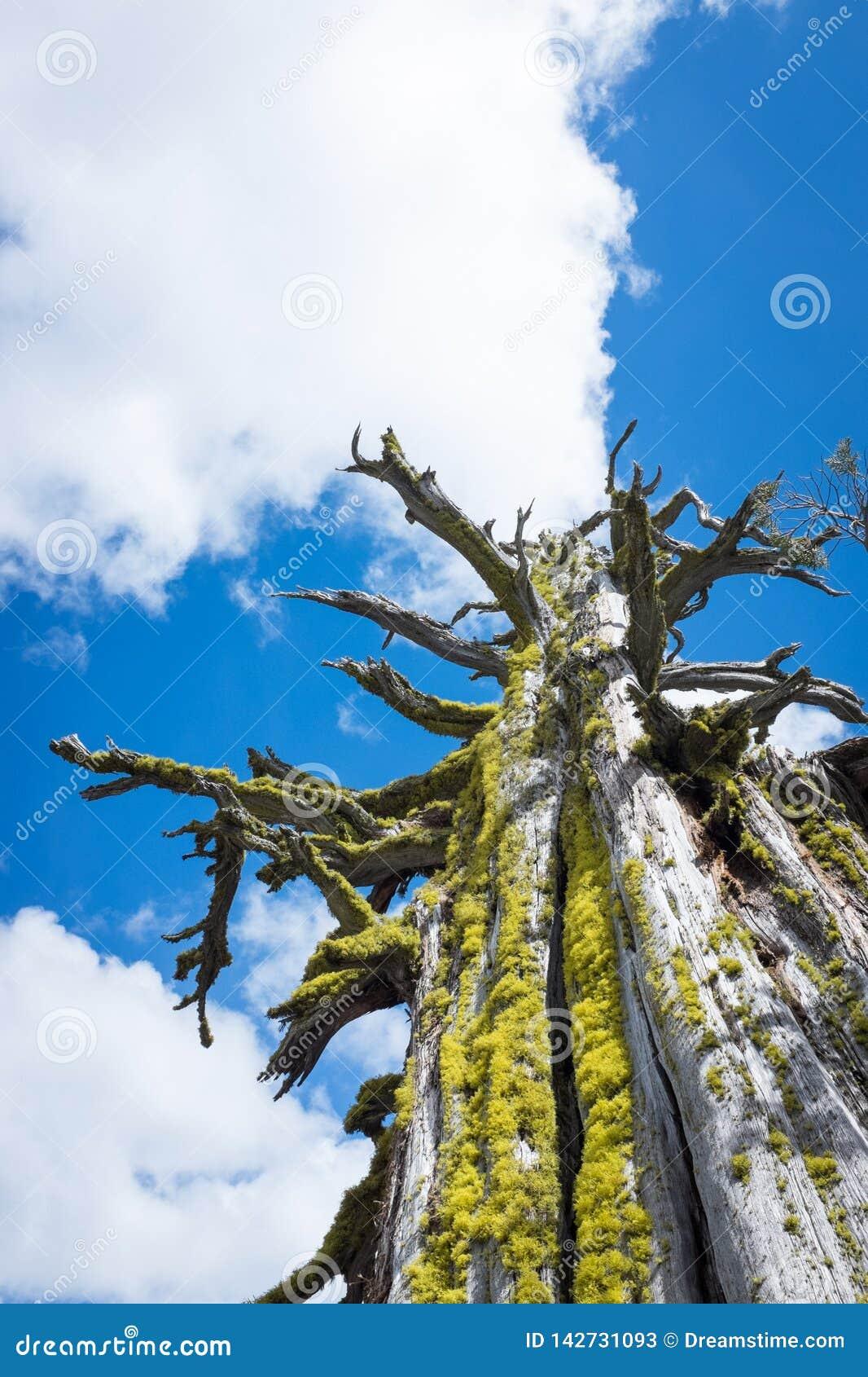 Vieux arbre et nuages
