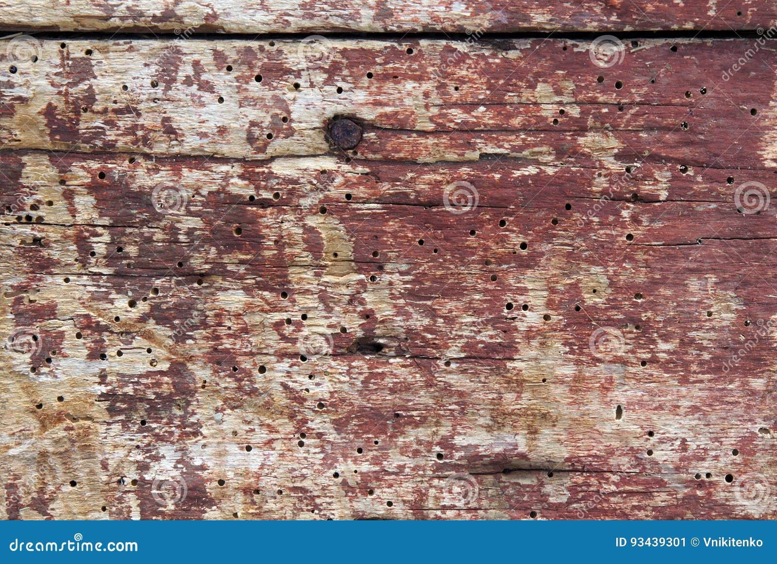 Vieux conseils avec des trous de ver de bois