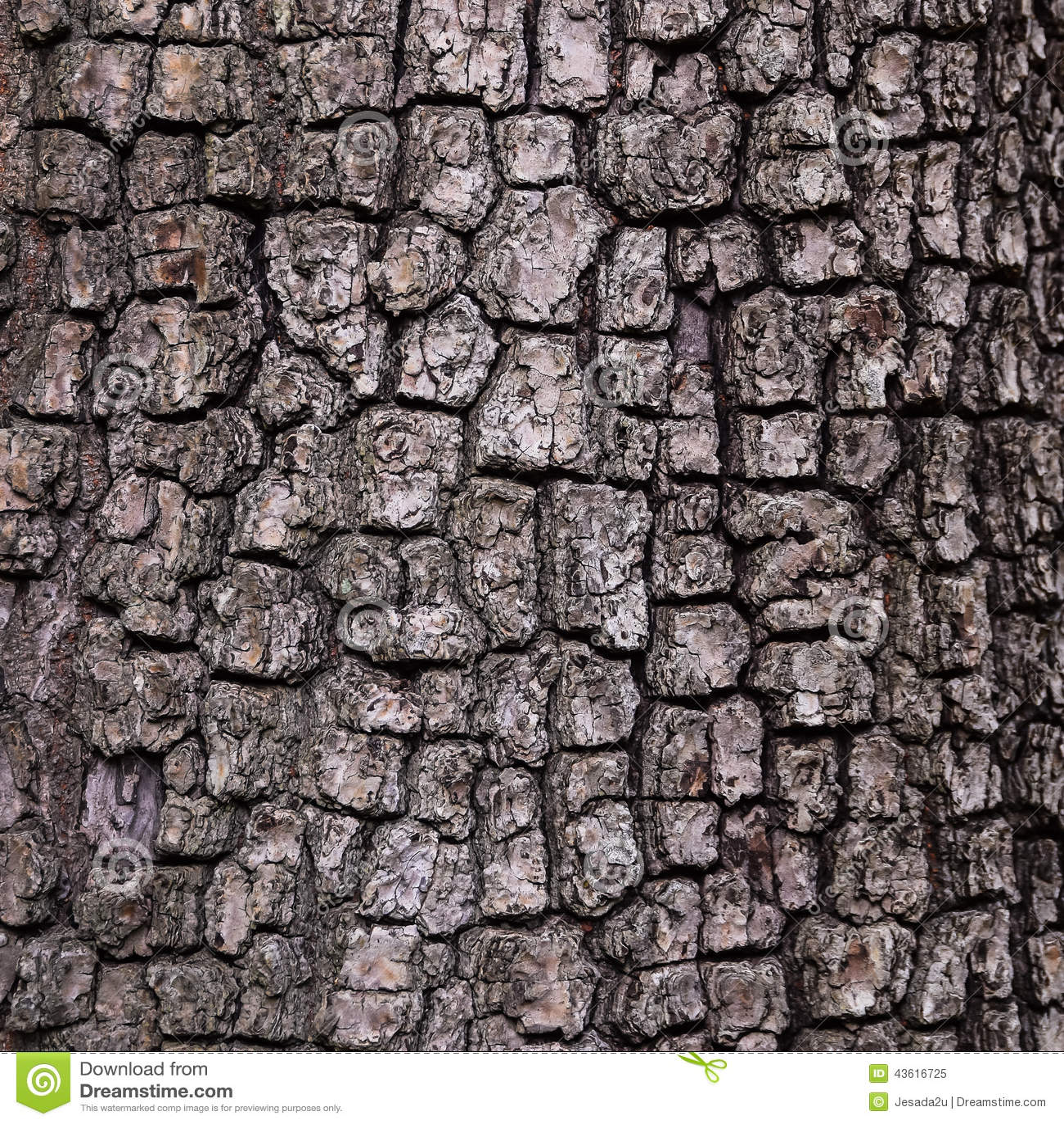 vieux fond en bois de texture d 39 arbre mod le d 39 corce photo stock image 43616725. Black Bedroom Furniture Sets. Home Design Ideas