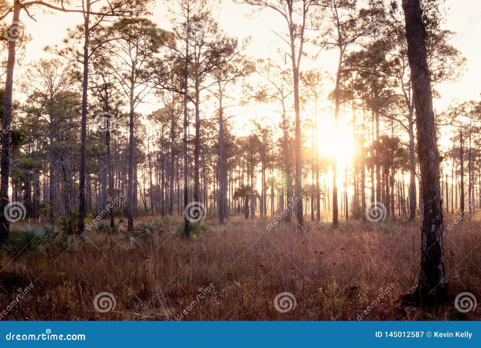Vieux lever de soleil de la Floride