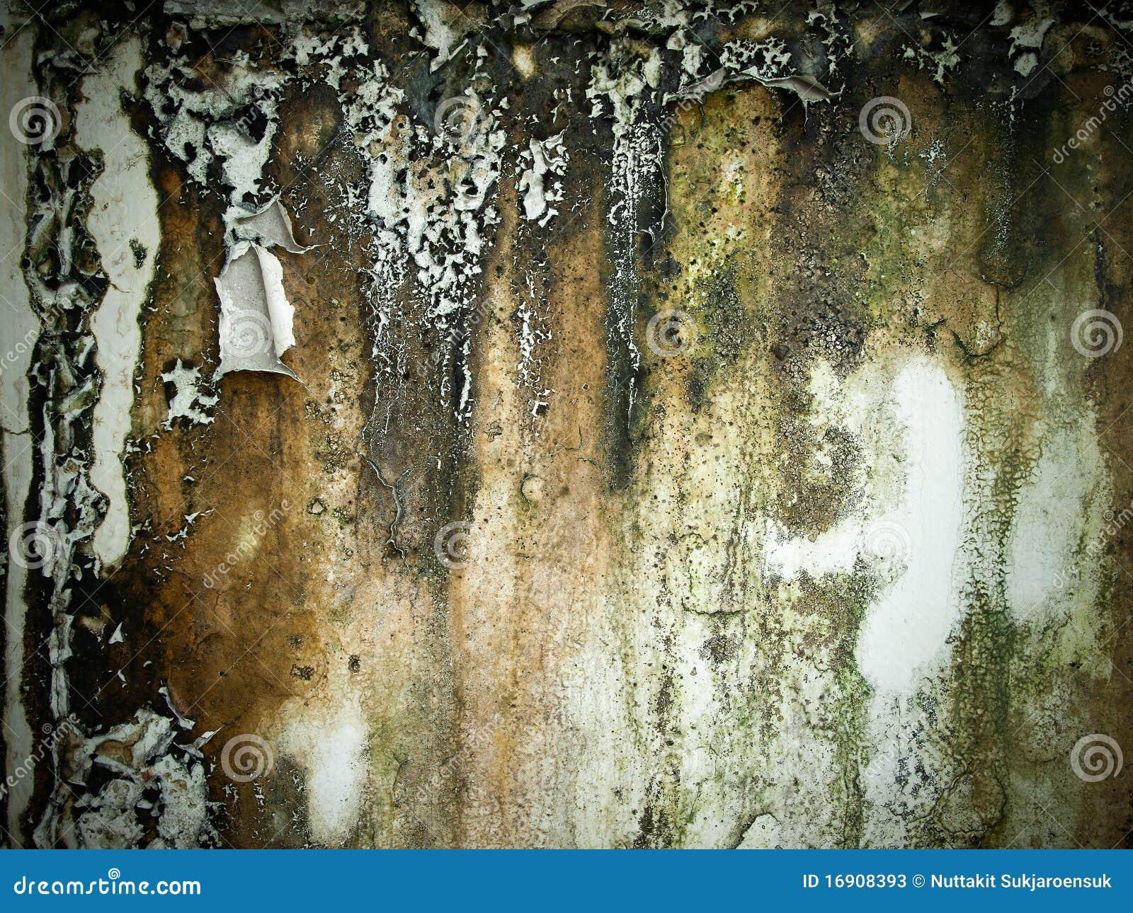 vieux mur humide rugueux photos stock image 16908393. Black Bedroom Furniture Sets. Home Design Ideas