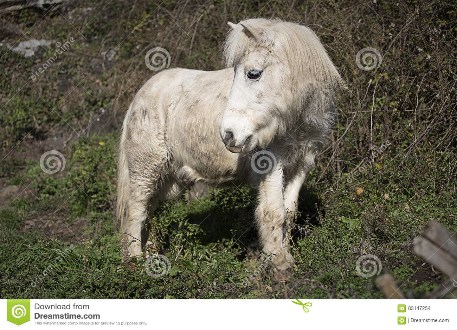 Vieux poney
