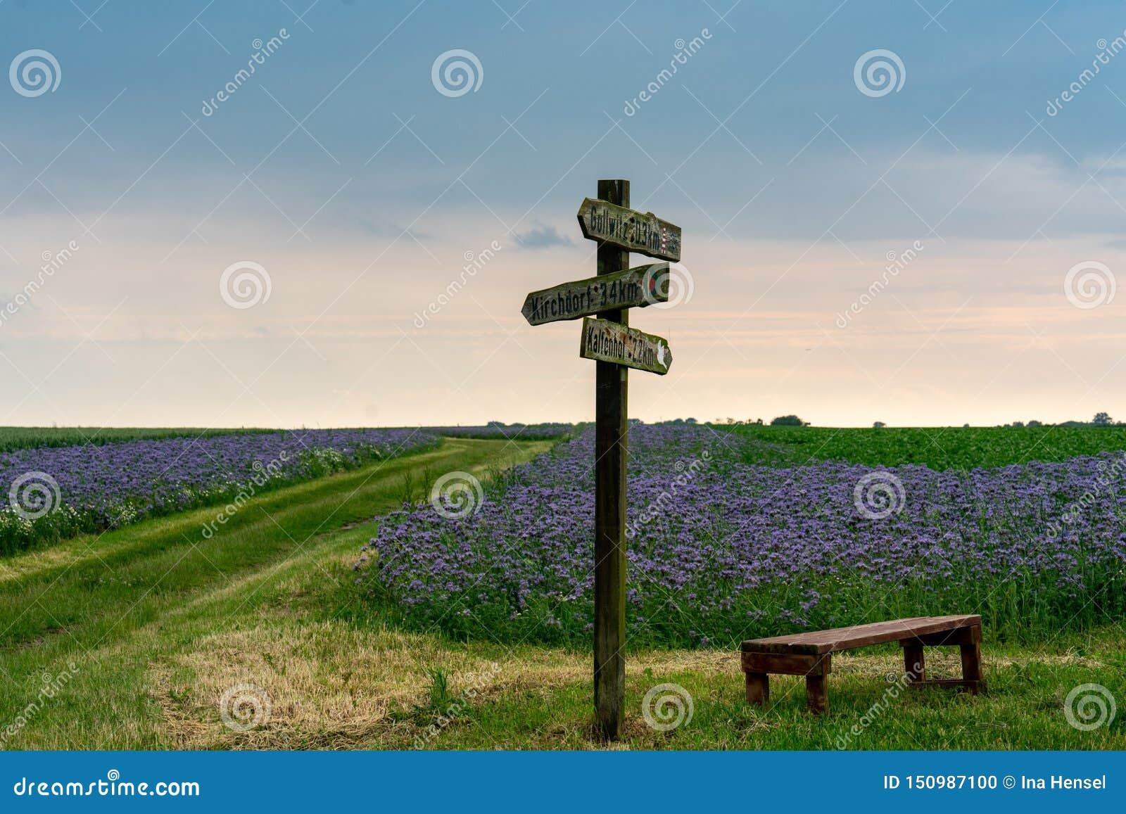 Vieux poteau de signe en bois dans un domaine des fleurs de floraison bleues