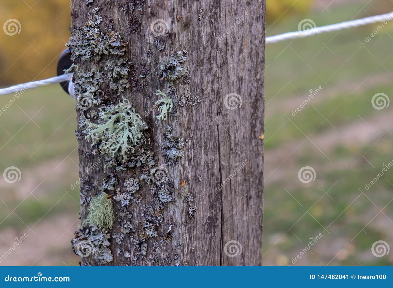 Vieux poteau rustique en bois de barrière avec de la mousse et des fils