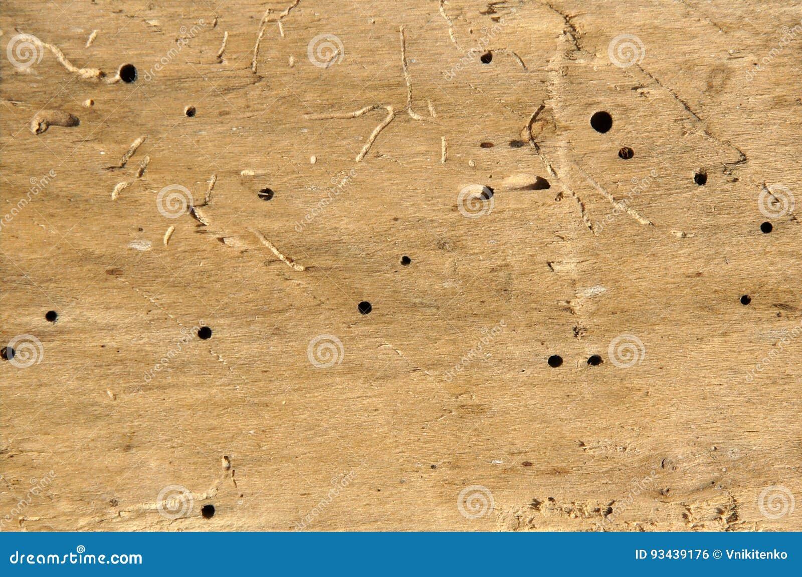 Vieux rondin avec des trous de ver de bois