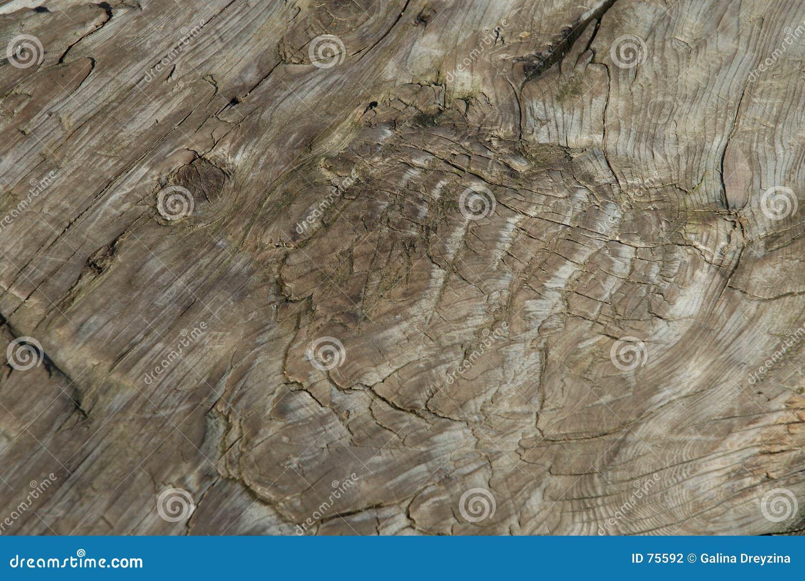 Vieux structire en bois