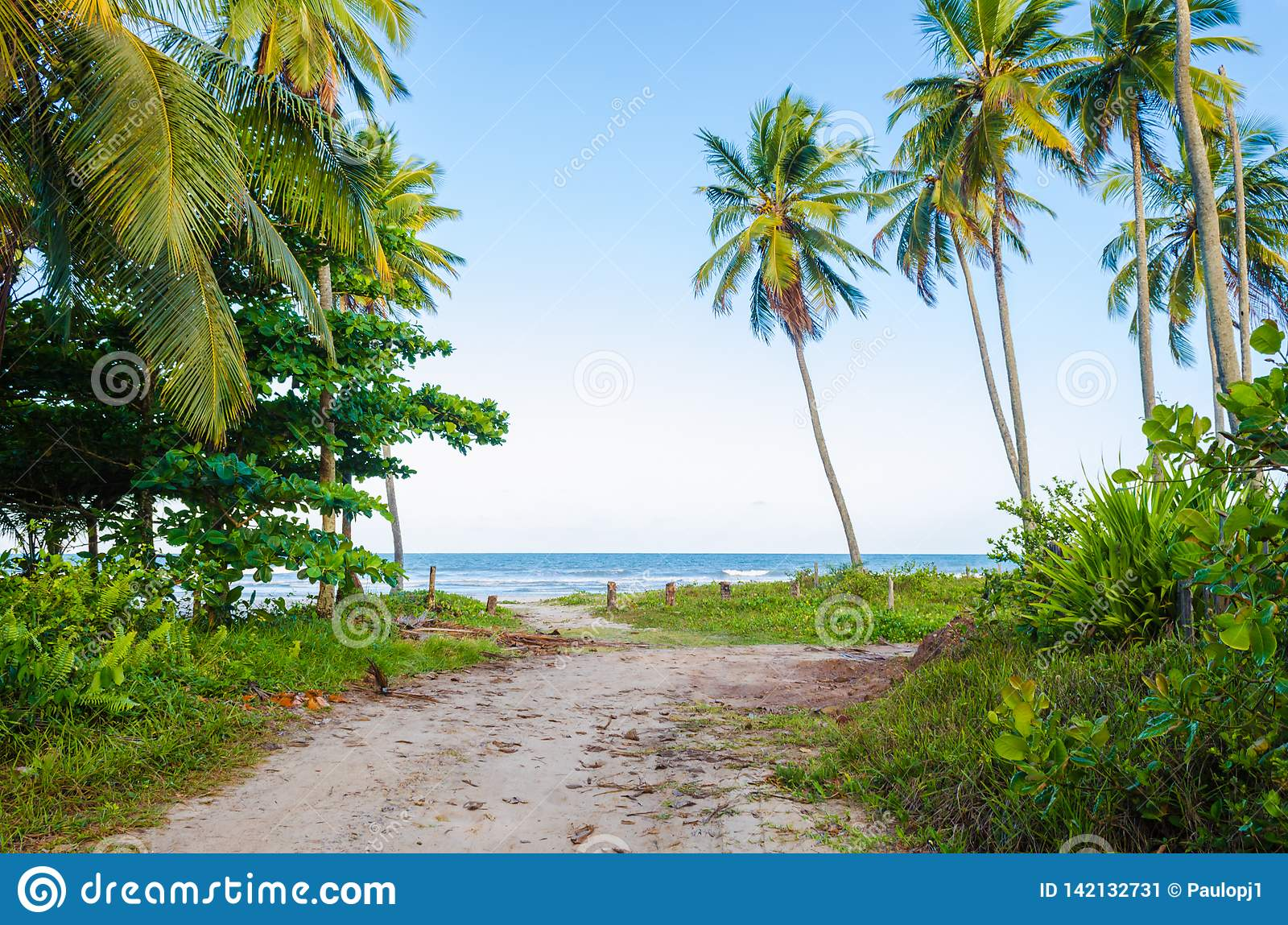 View of arrival on the beach with blue sky, sea on the horizon, coconut trees, green vegetation and a small dirt road.