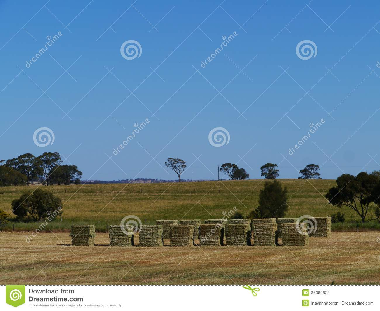 View of the australian grass fields royalty free stock for Landscapers adelaide south