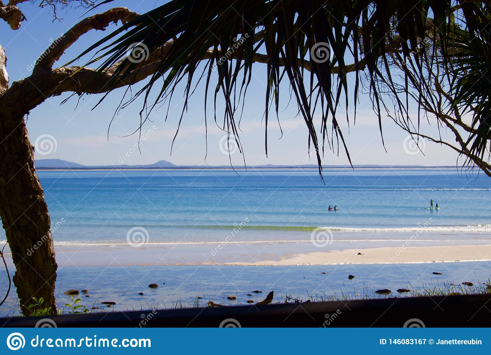 View of beach at Noosa with overhanging palm fronds