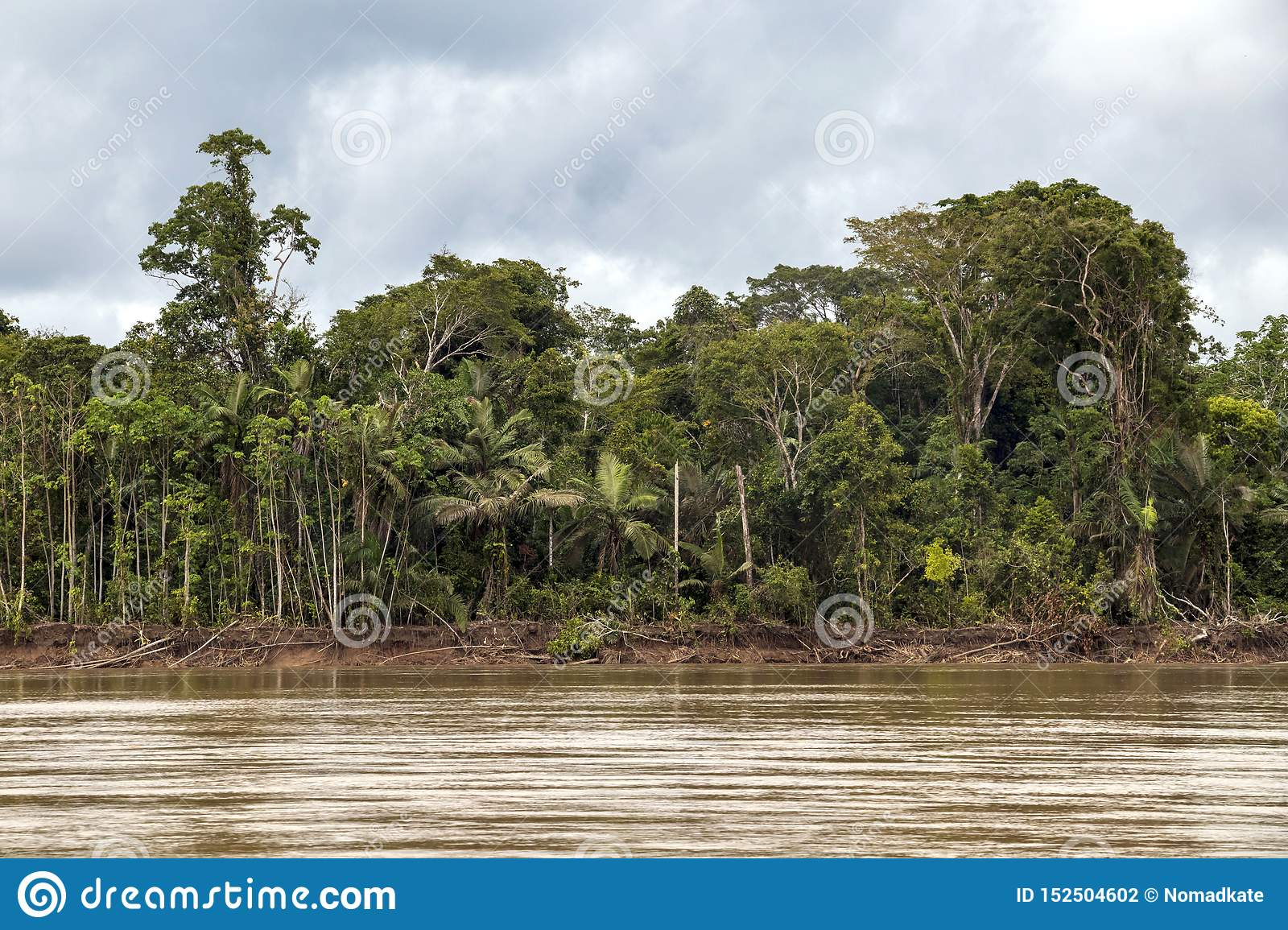 View of Beni river and rainforest of Madidi national park in the upper Amazon river basin in Bolivia, South America