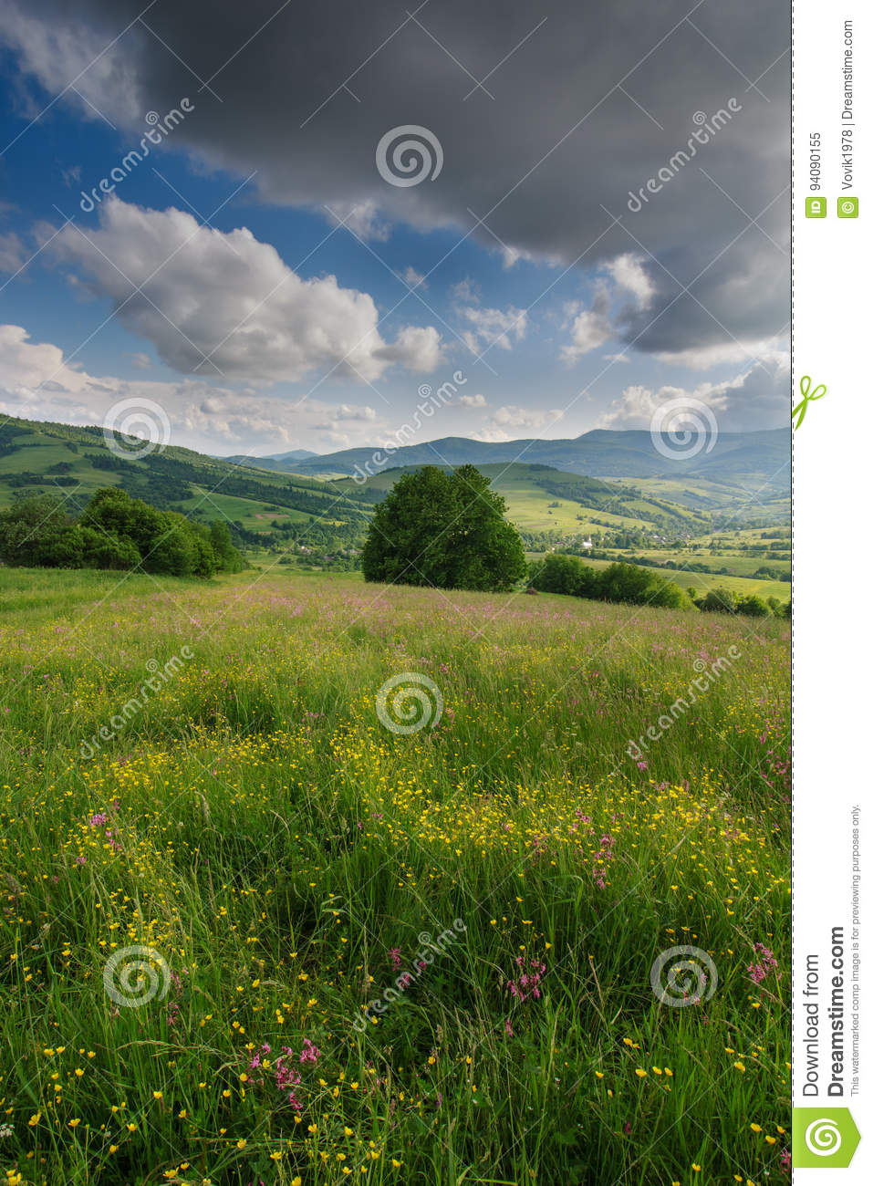 View of the blooming flowers, summer meadow in the mountains and blue cloudy sky.
