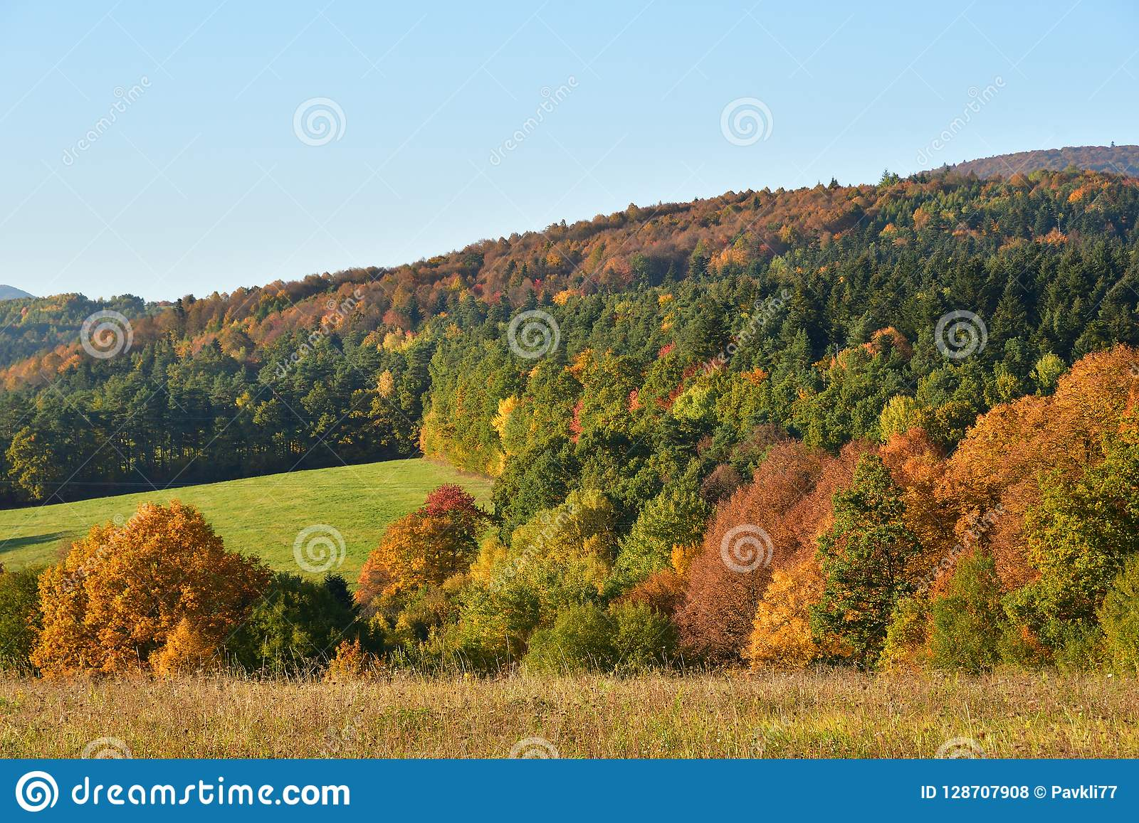nature trees in autumn colored in color landscapes stock photo