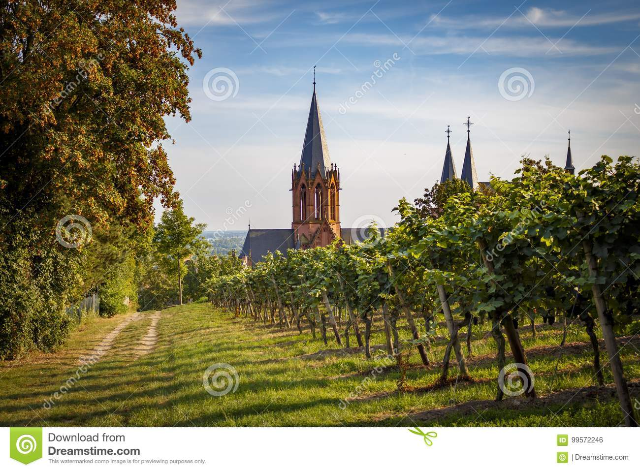 View of the gothic cathedral church Katharinenkirche in Oppenheim through romantic vineyards