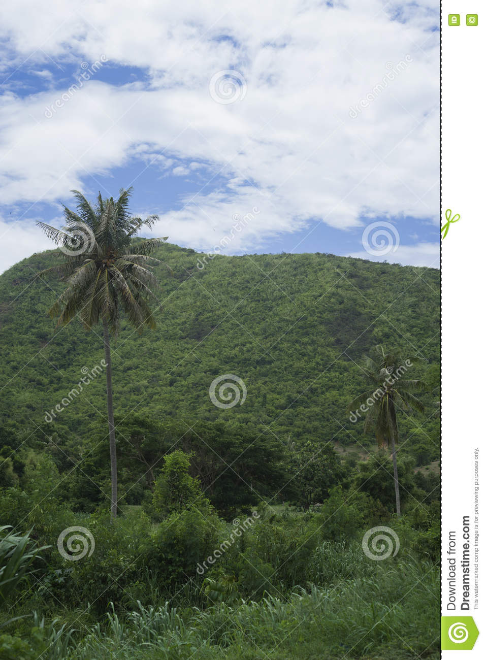 View of green field , tree ,coconut tree and green mountain with blue sky and cloud,selective focus,natural color picture style